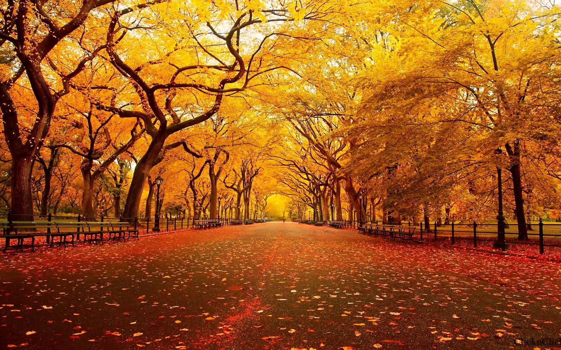 Popular Screensavers And Wallpaper 47 Images: Autumn Screensavers Wallpaper (57+ Images