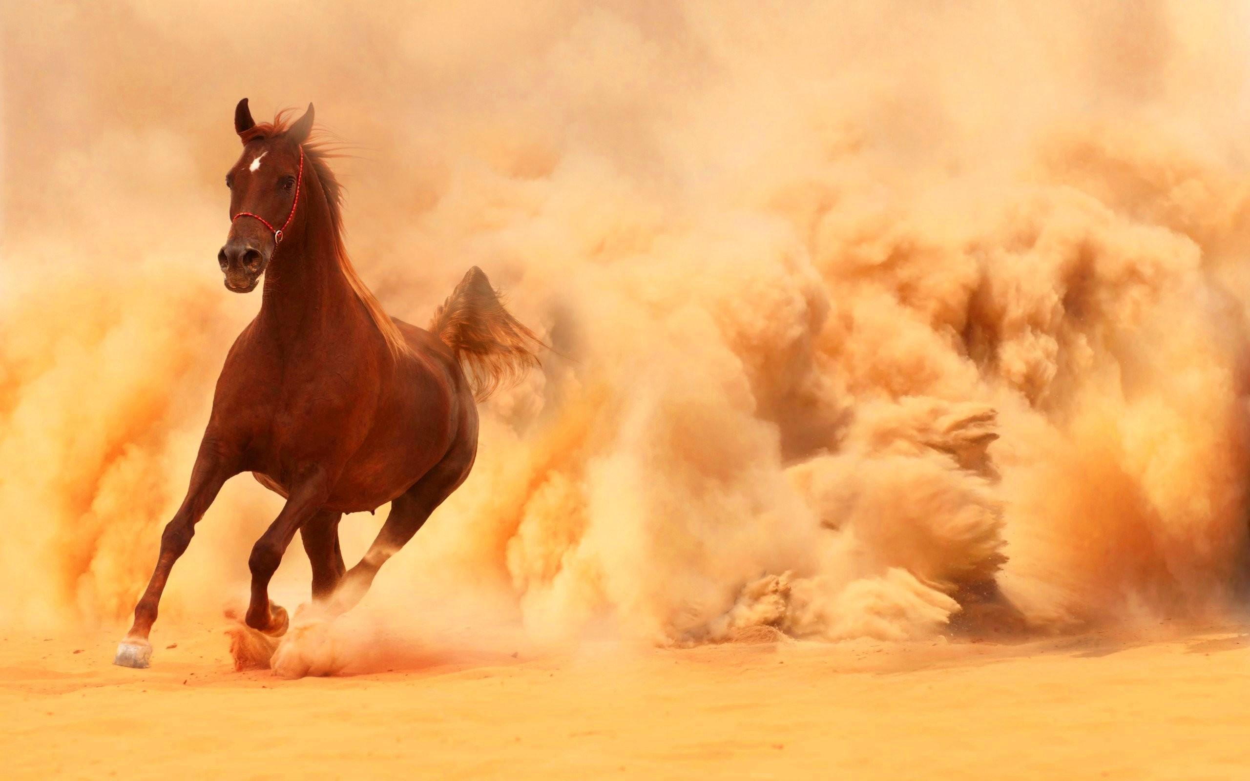 Arabian Horse Wallpaper 55 Images