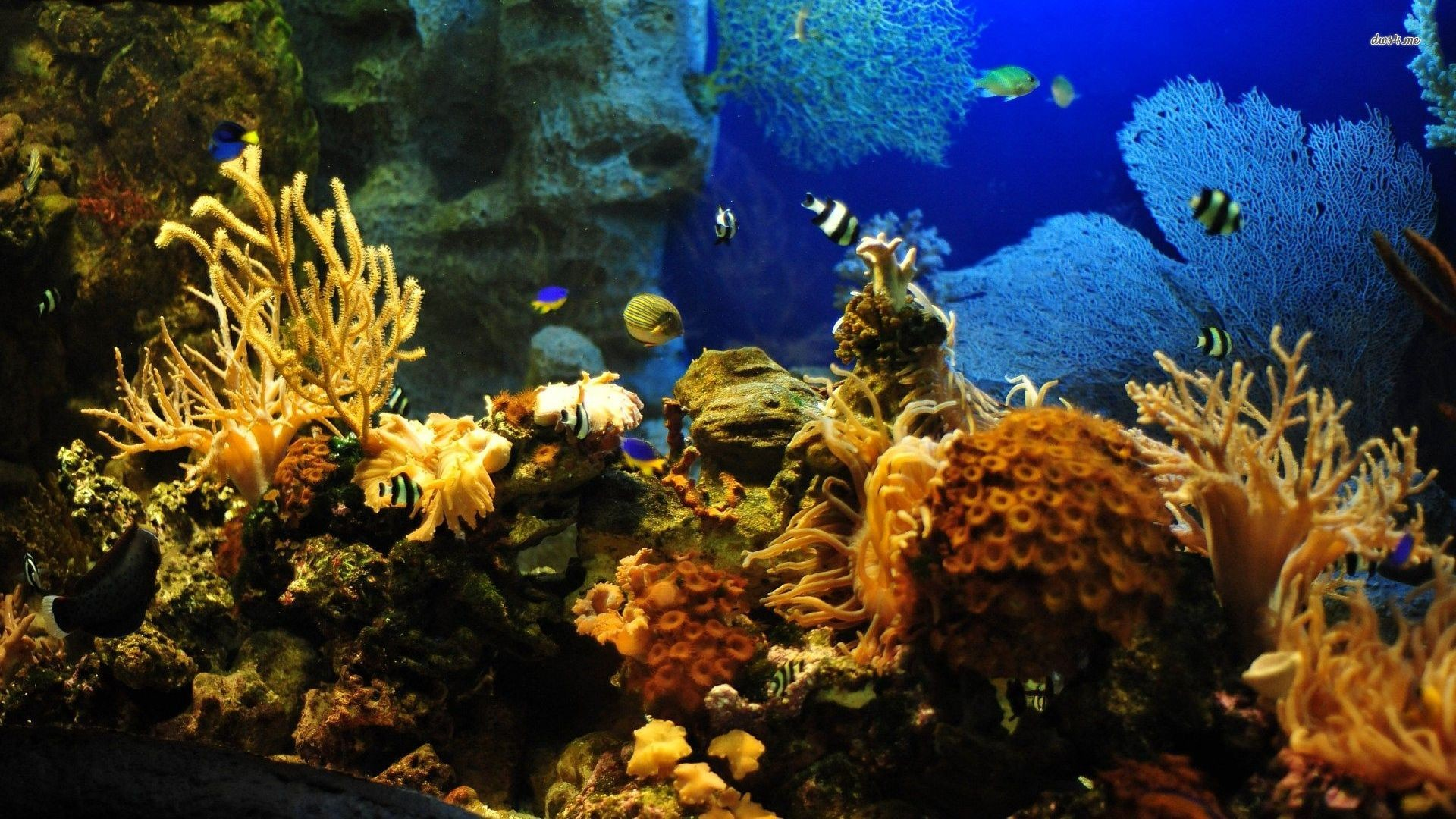 "best aquarium live wallpaper for pc aa"" hd wallpaper"