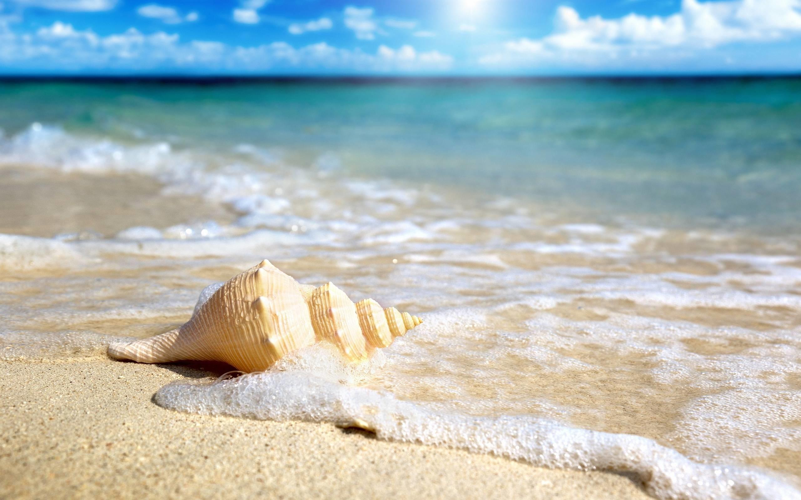 Permalink to Seashells On The Beach Wallpaper