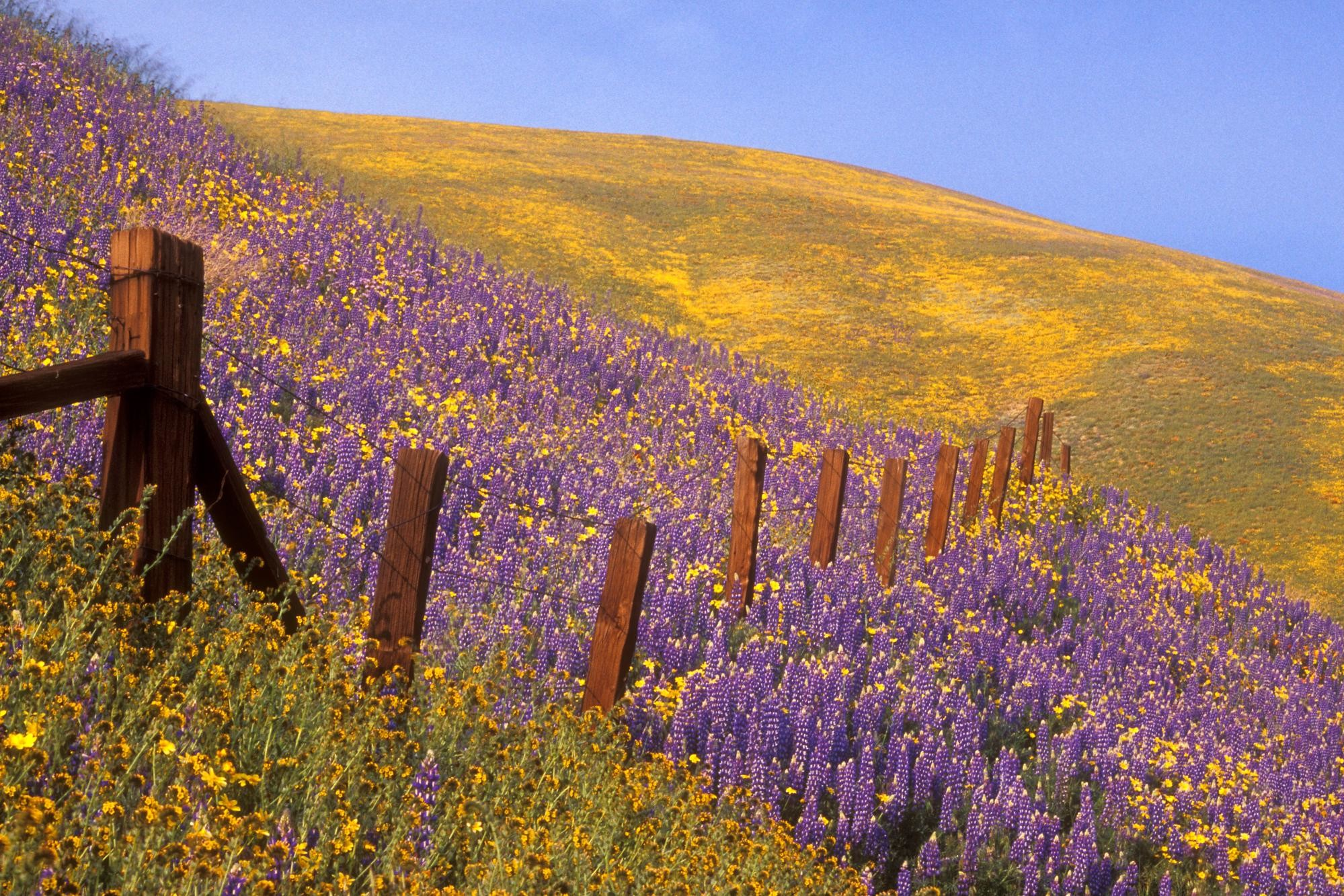 1999x1333 Barbed Wire and Wildflowers Gorman California
