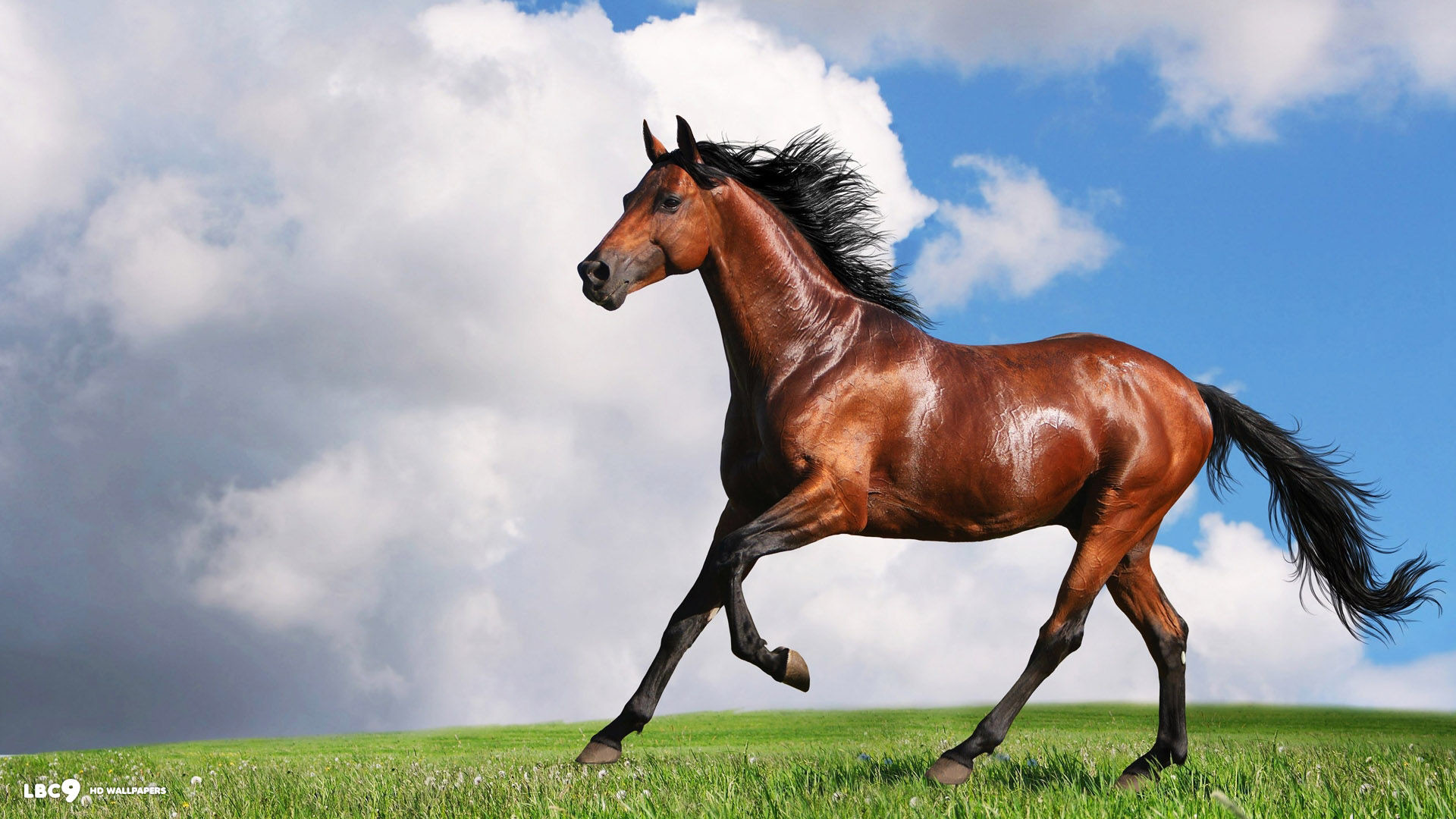 1920x1080 beautiful horse high definition wallpaper free