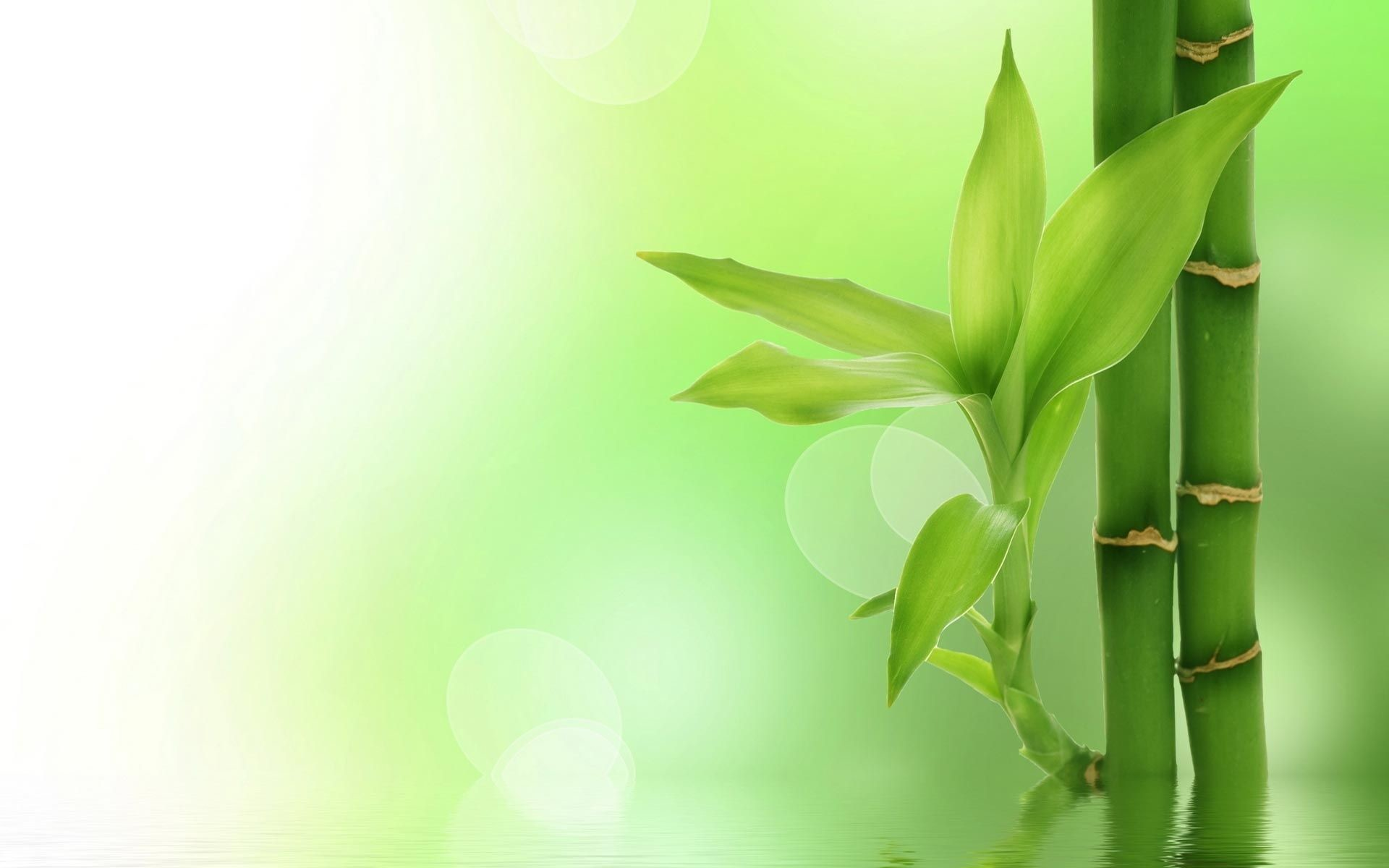 1920x1200 Widescreen Wallpapers of Bamboo › Excellent Wallpapers