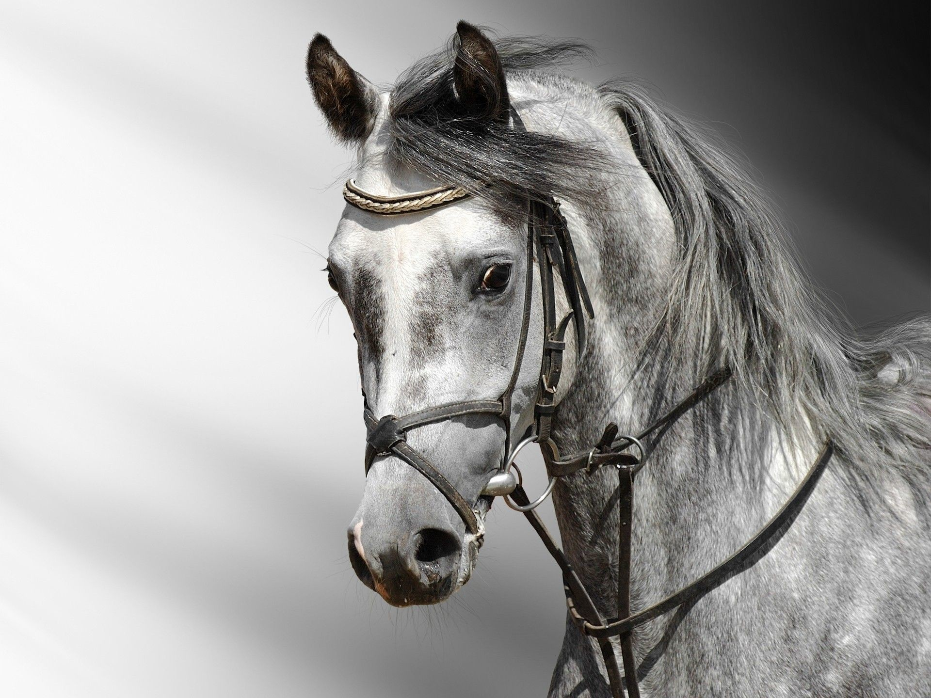 1920x1440 Horse Wallpapers HD Android Apps on Google Play 1920×1440 Images Of Horse  Wallpapers (