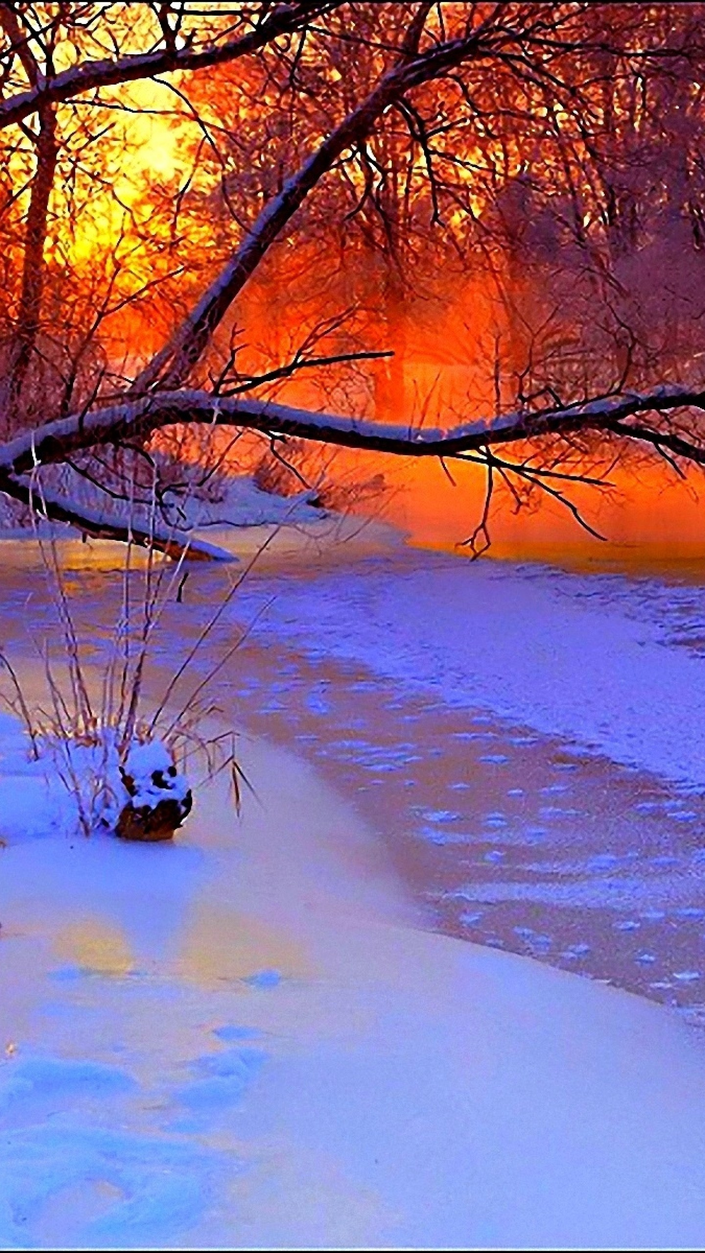 1440x2560 Preview wallpaper winter, sunset, evening, branches, tree, pond, cold,