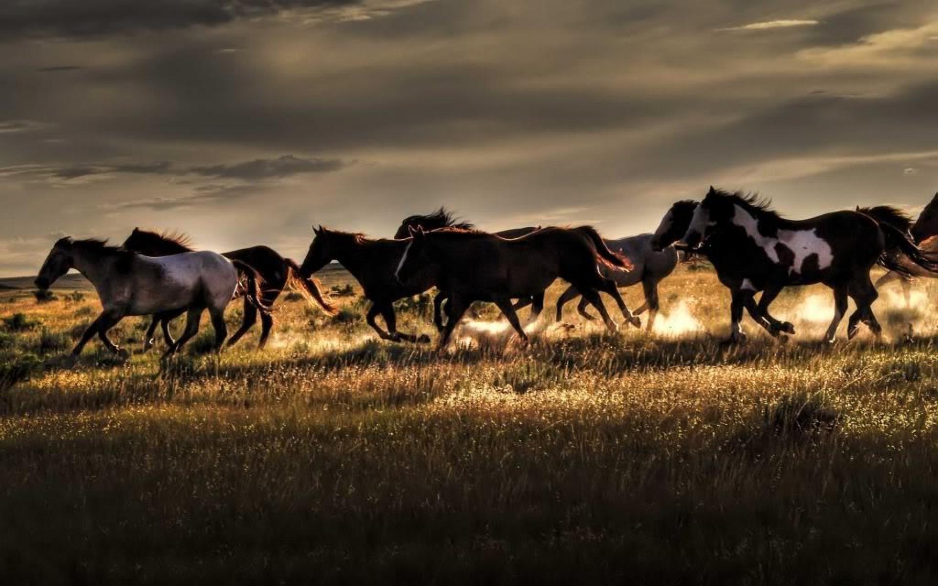 Wild Horse Desktop Wallpapers 70 Images