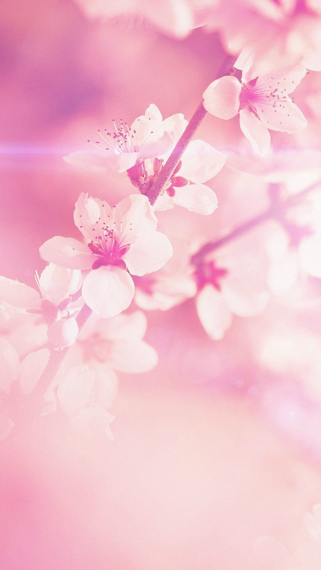 Pretty Flower Background 52 Images
