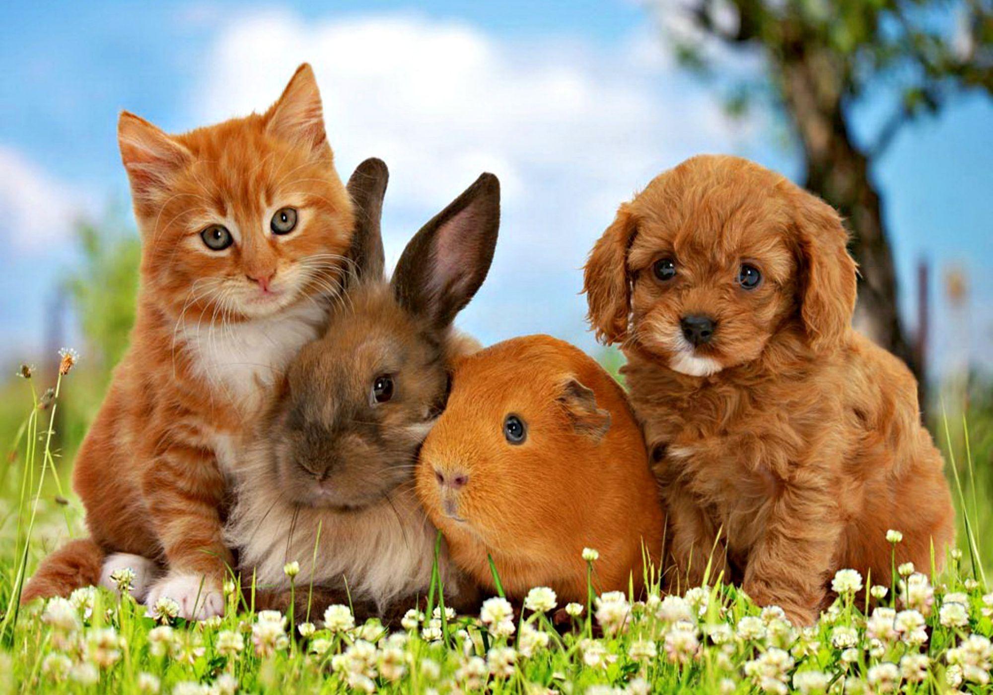 cats dogs wallpaper desktop (51+ images)