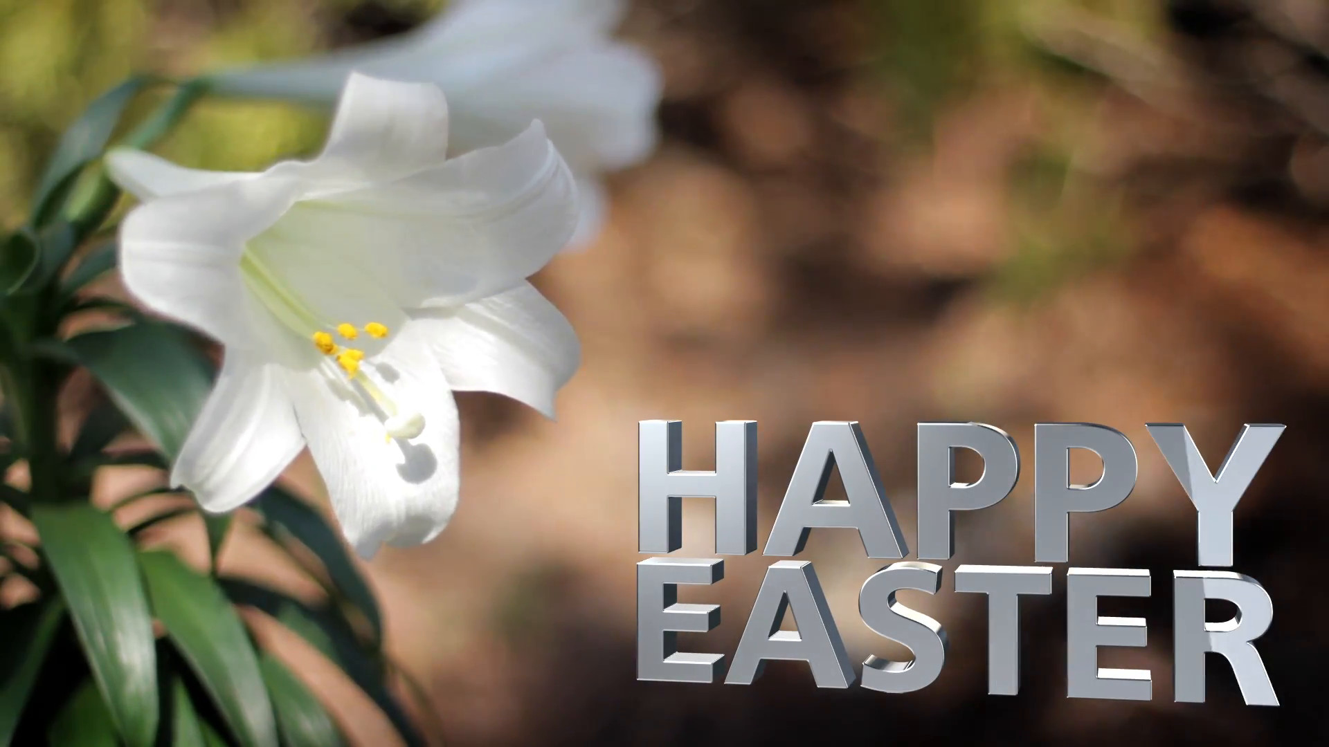 1920x1080 Easter Lilies in Breeze Happy Easter Text Motion Background - VideoBlocks