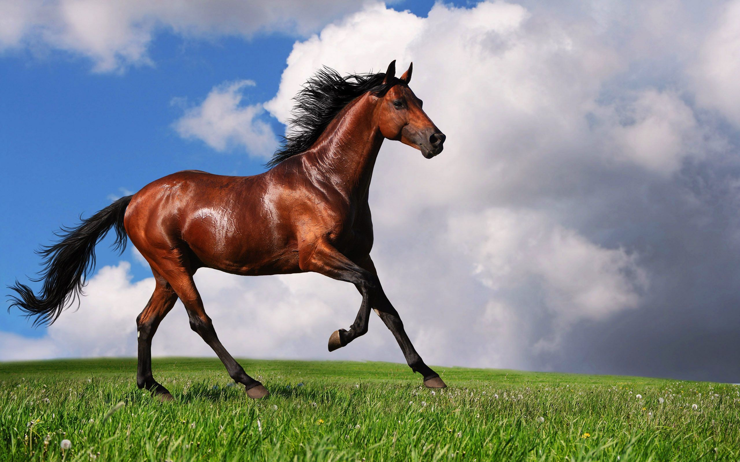 2560x1600 Ride an Arabian Horse – The Drinkers of the Wind