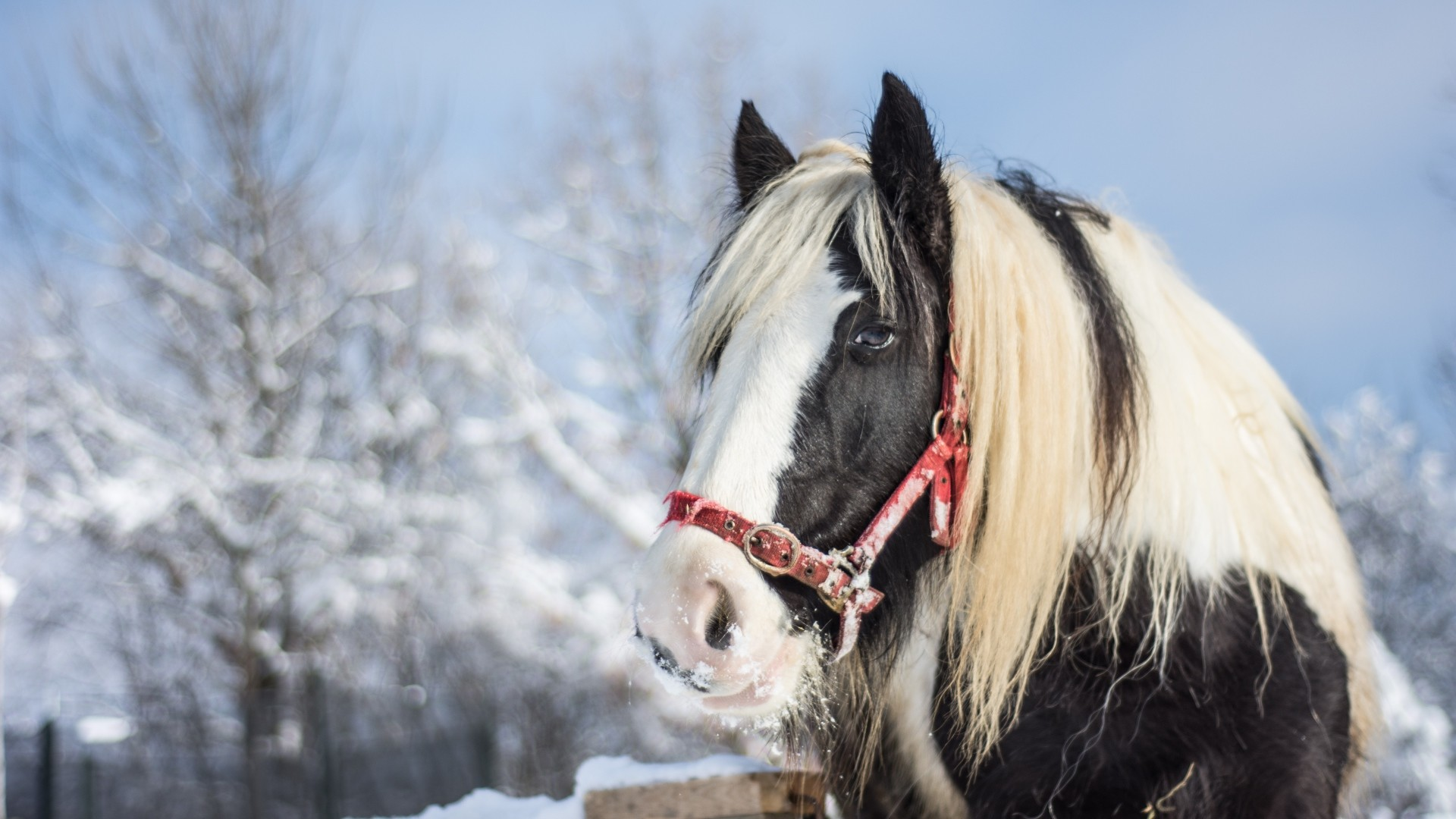 Winter Horses Pictures Wallpaper 53 Images