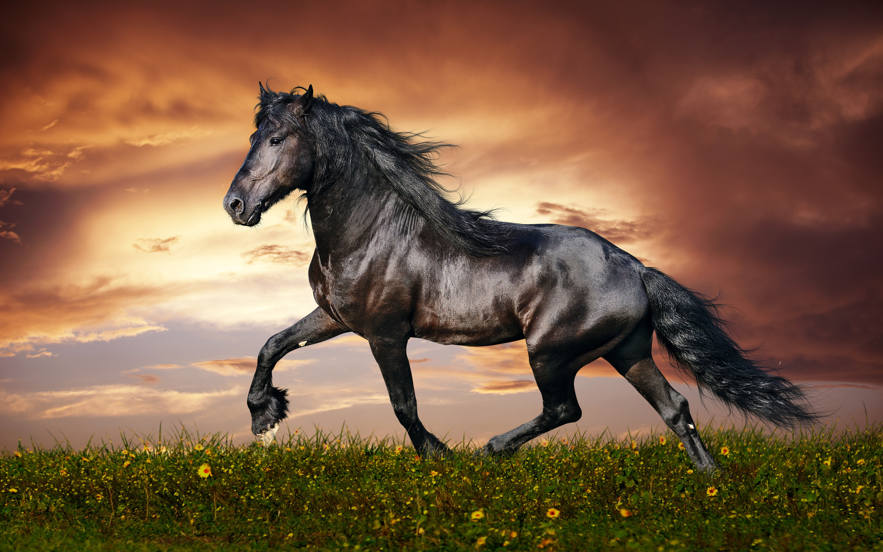 Running horse hd wallpaper download