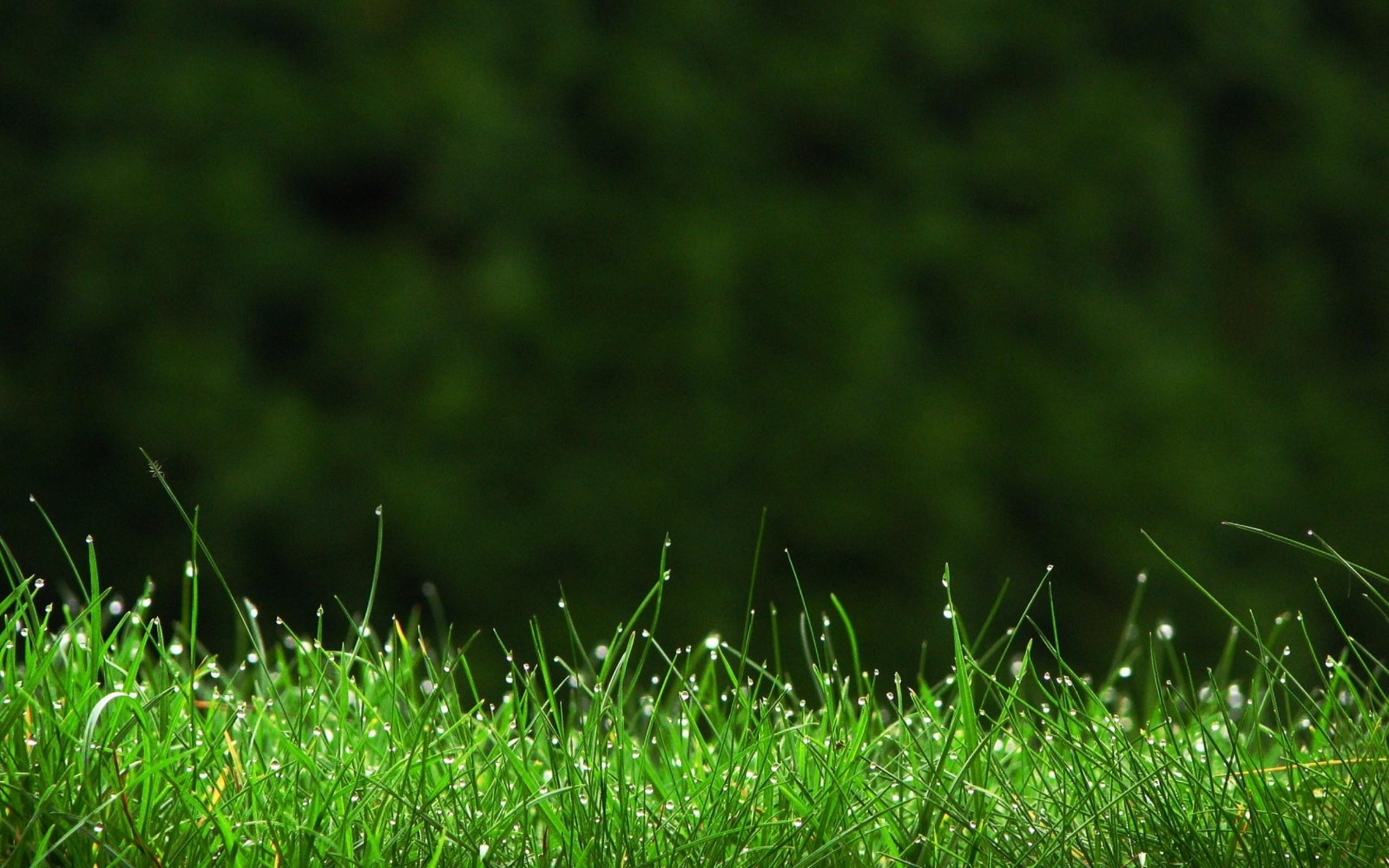 Hd Grass Wallpaper 76 Images