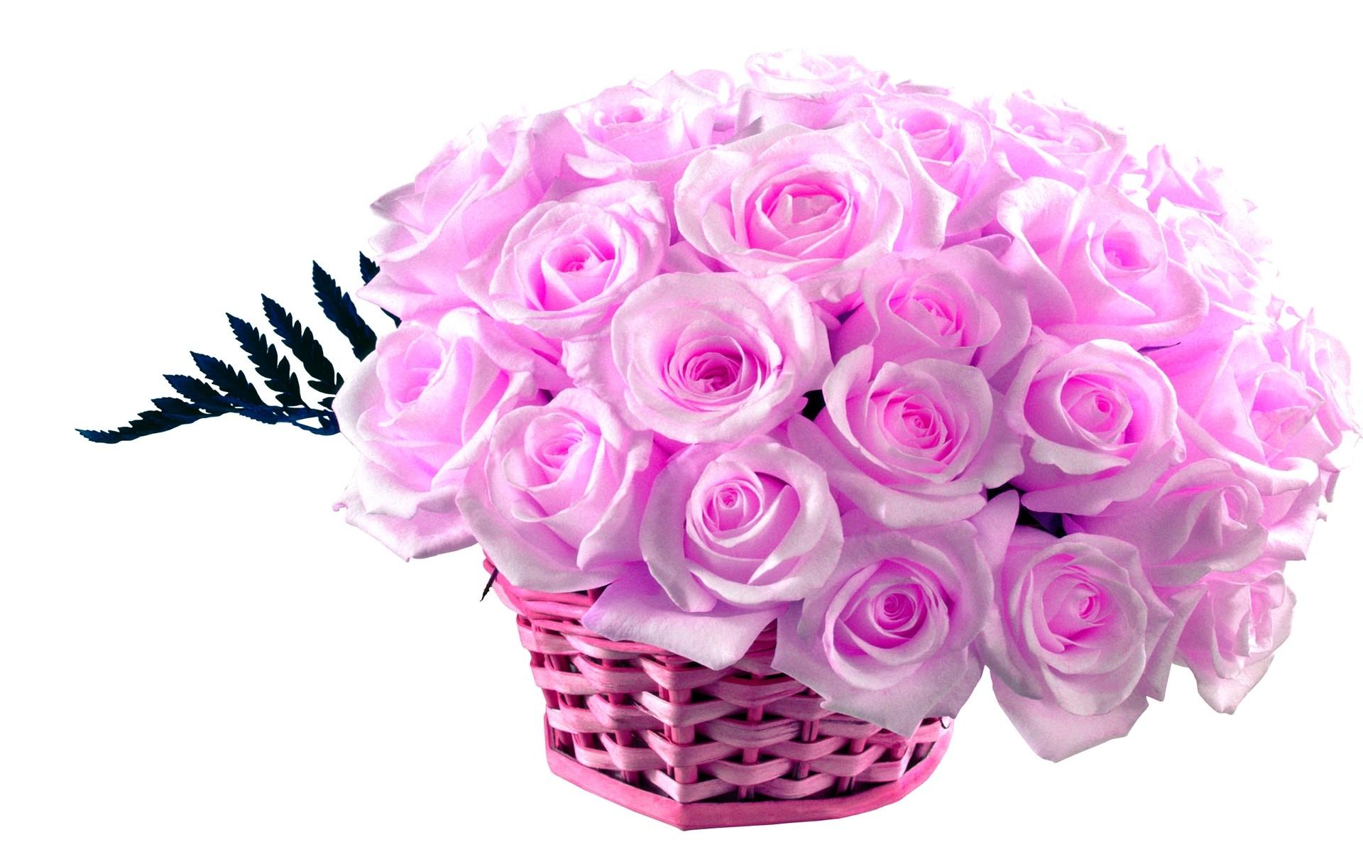 2560x1600 Pink Roses Wallpaper HD
