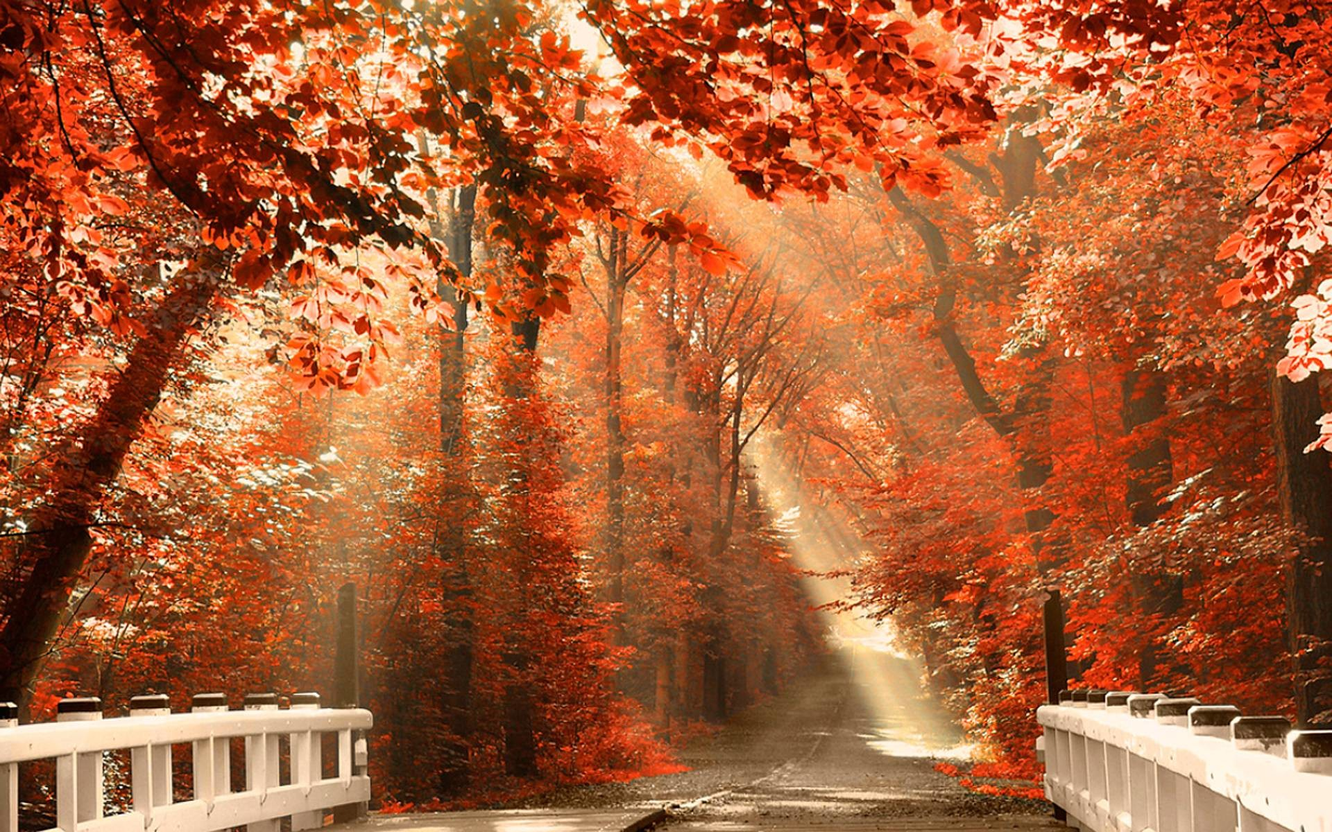 Fall Computer Backgrounds 76 Images