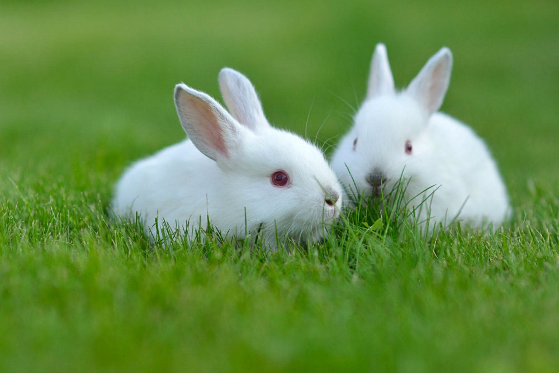 Cute pet rabbits