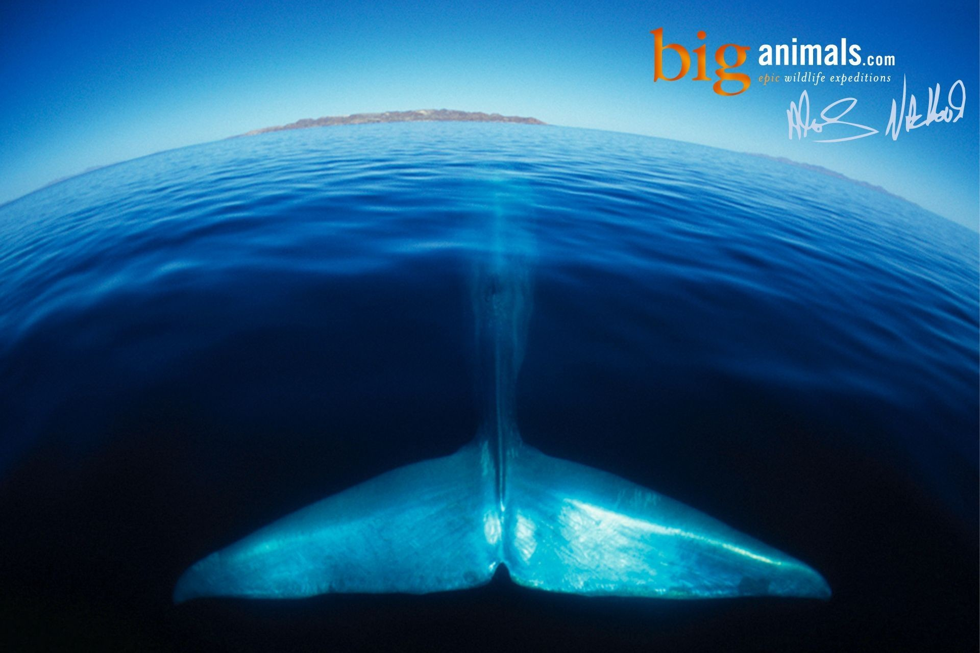 1920x1280 Blue Whale Cool Wallpapers 12028 - Amazing Wallpaperz