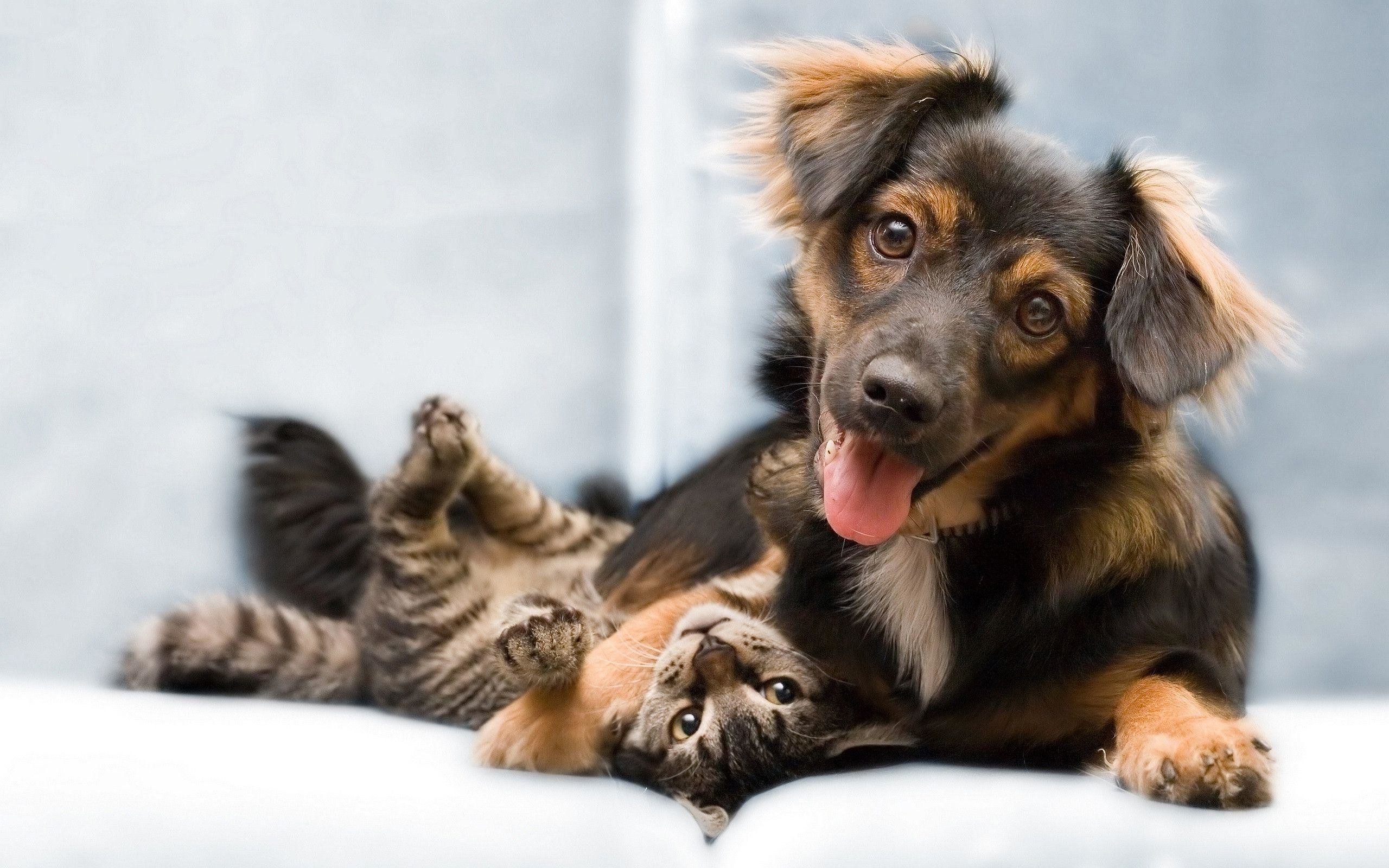 2560x1600 Wallpapers For Funny Cat And Dog