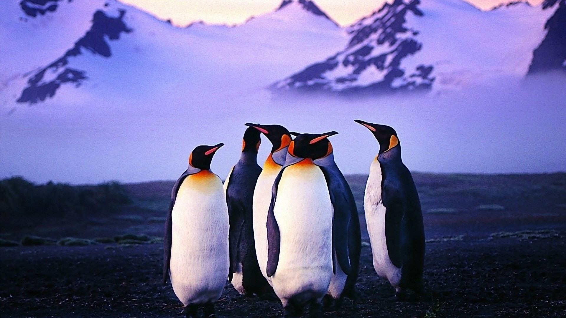 1920x1080 Penguin Wallpaper Pictures HD Desktop Wallpaper, Background Image