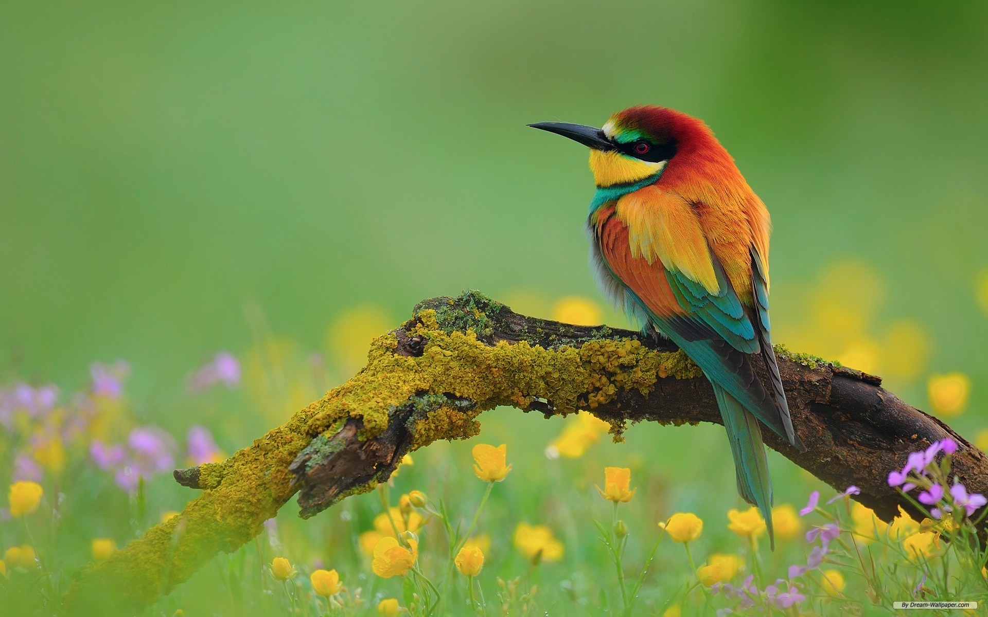 spring animal wallpapers: Spring Animal Wallpaper For Desktop (49+ Images