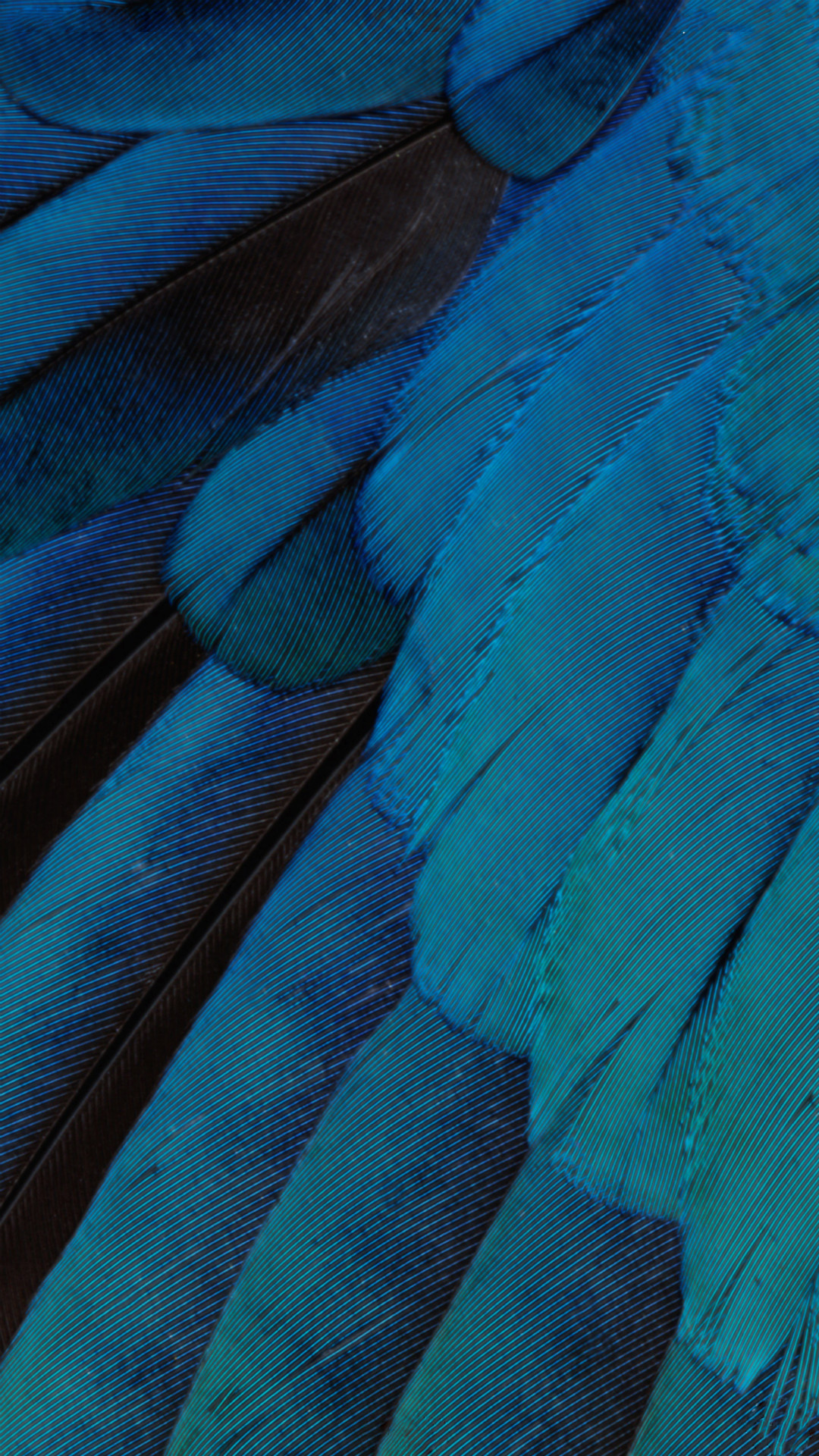 1080x1920 iOS9 Wallpaper Blue Feather Pattern Art iPhone 8 wallpaper