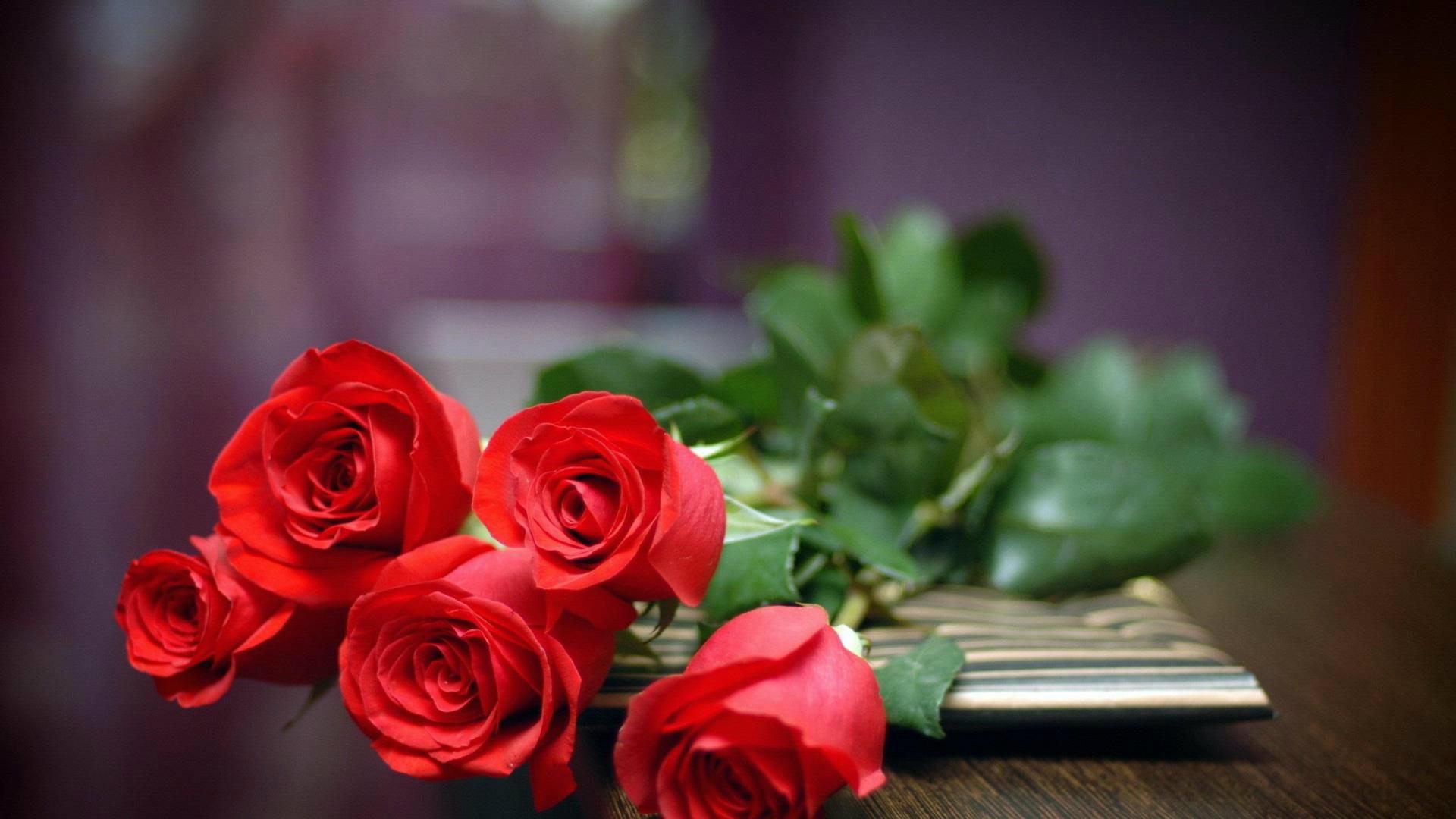Red Rose Wallpaper 72 Images