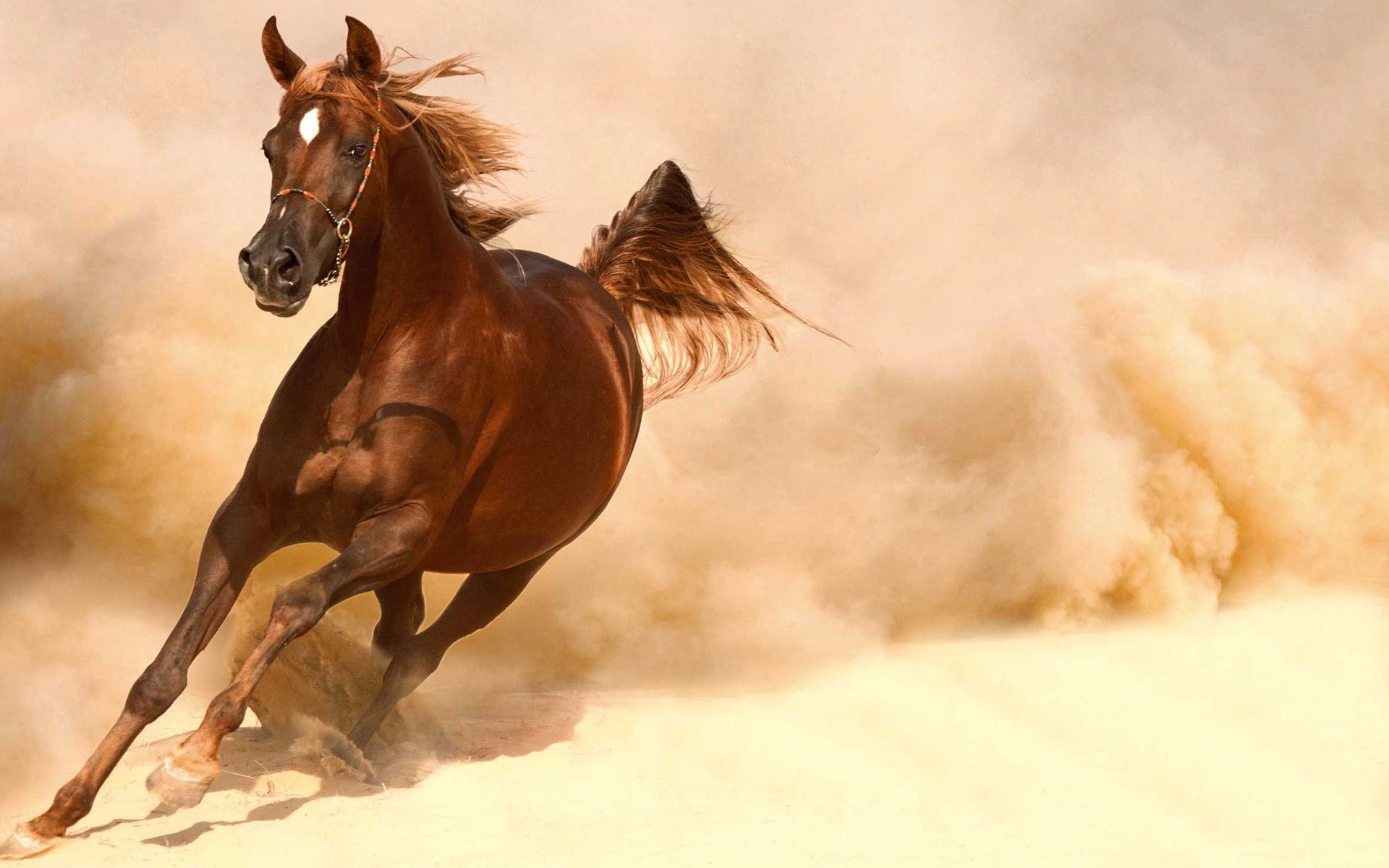 Running Horses Wallpaper (63+ images) - photo#14