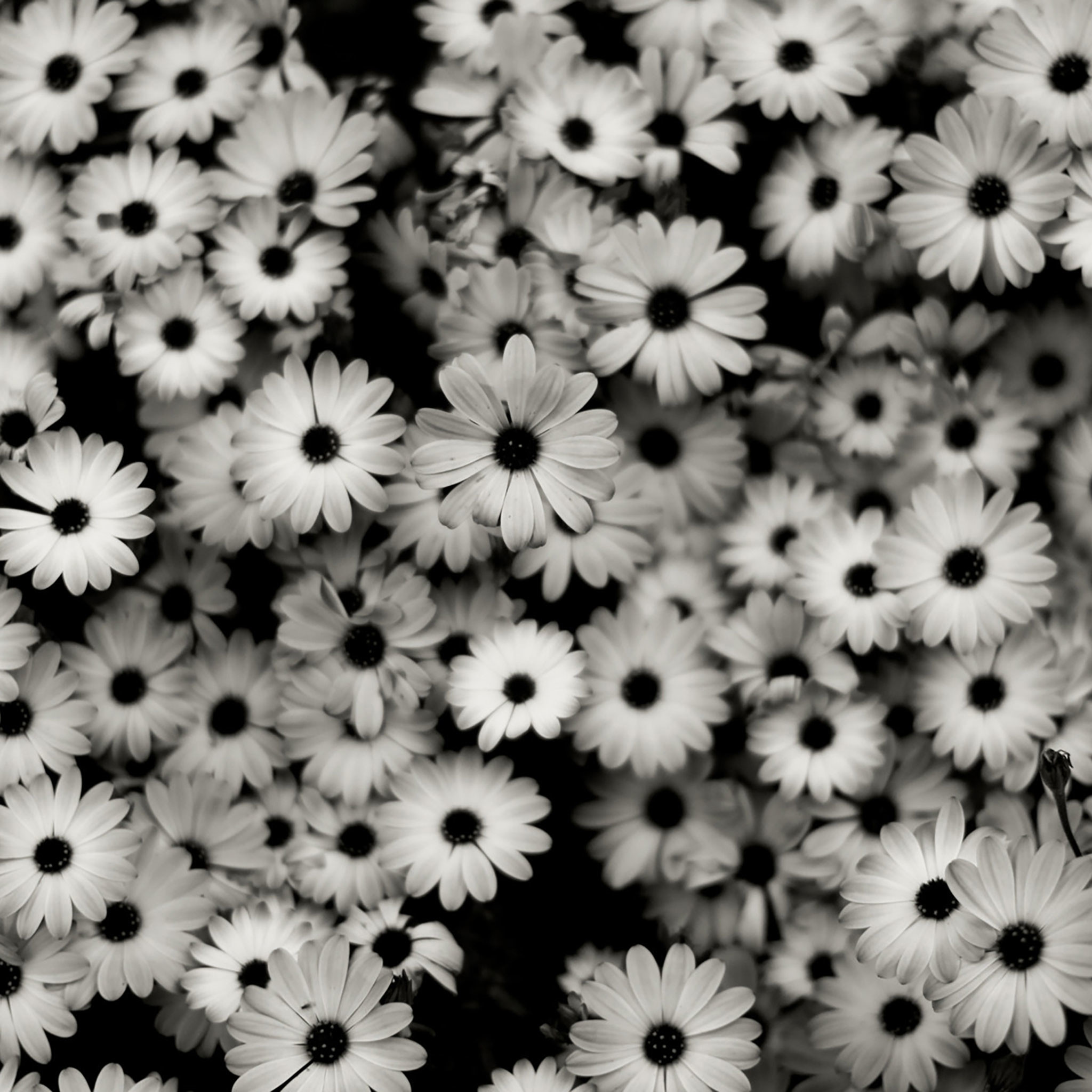 Black And White Background Images 60 Images