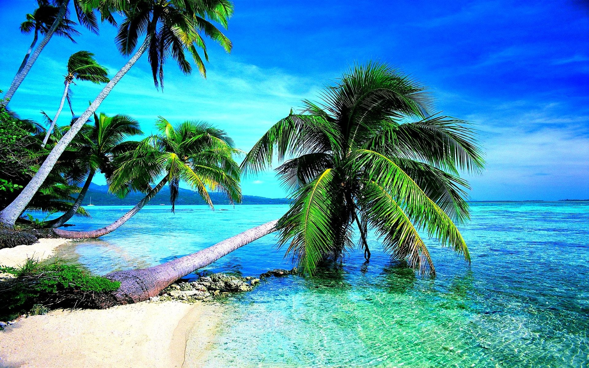 1920x1200 Free Beach Screensavers And Wallpapers Tropical Beach With Large .