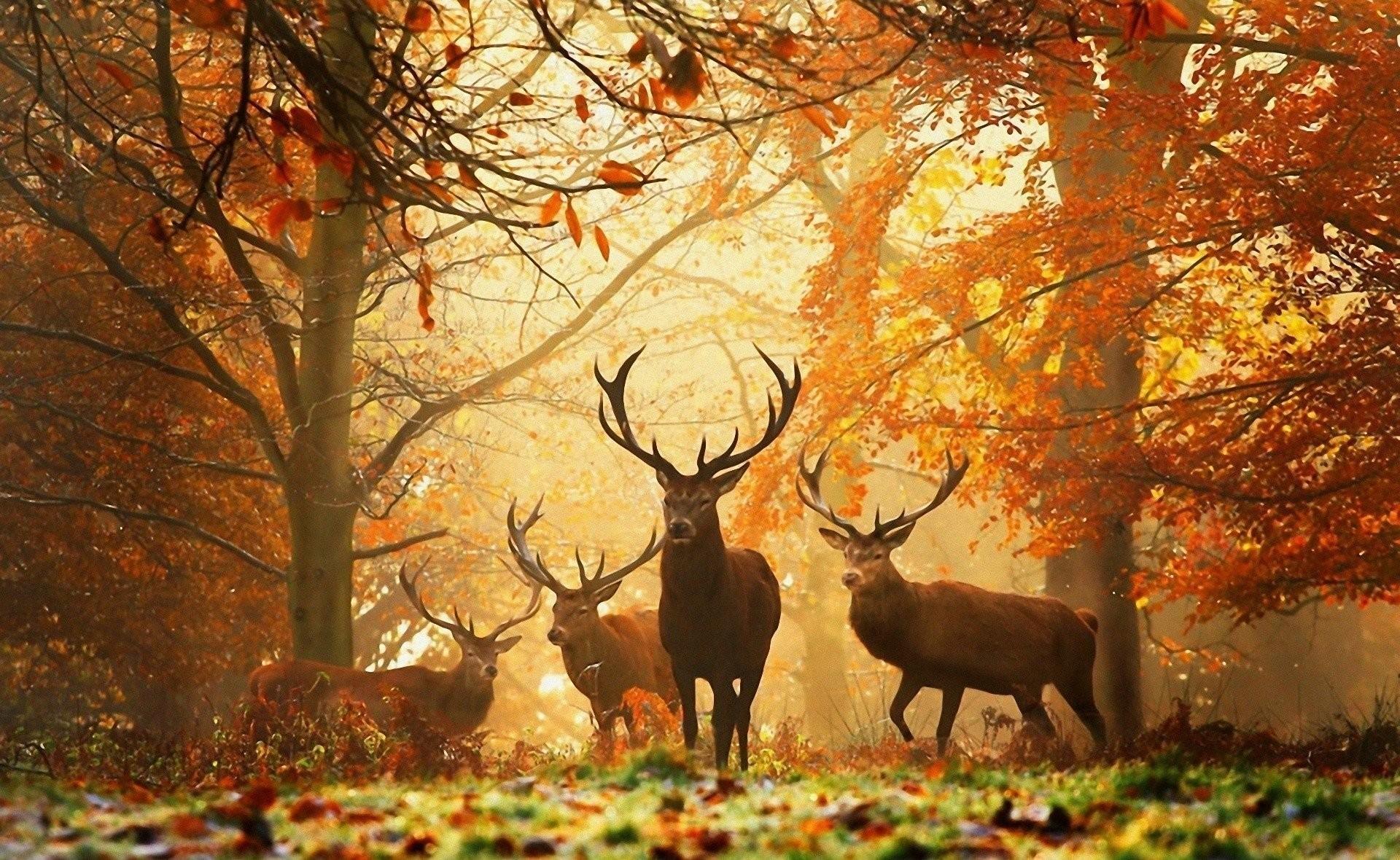 Deer Hunting Wallpaper for Computer (57+ images)