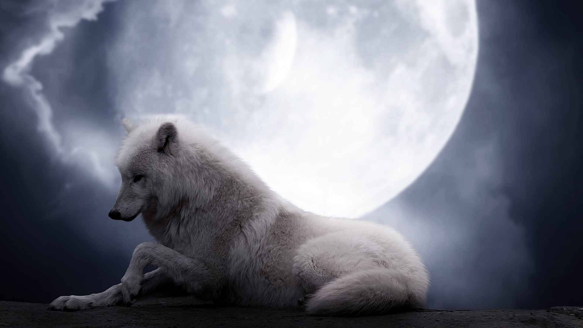 1920x1080 Preview wallpaper wolf, moon, lie, predator