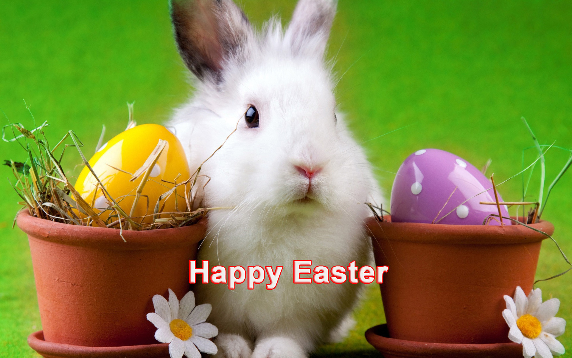 1920x1200 Happy Easter Cute White Bunny Hd Desktop Wallpapers Images