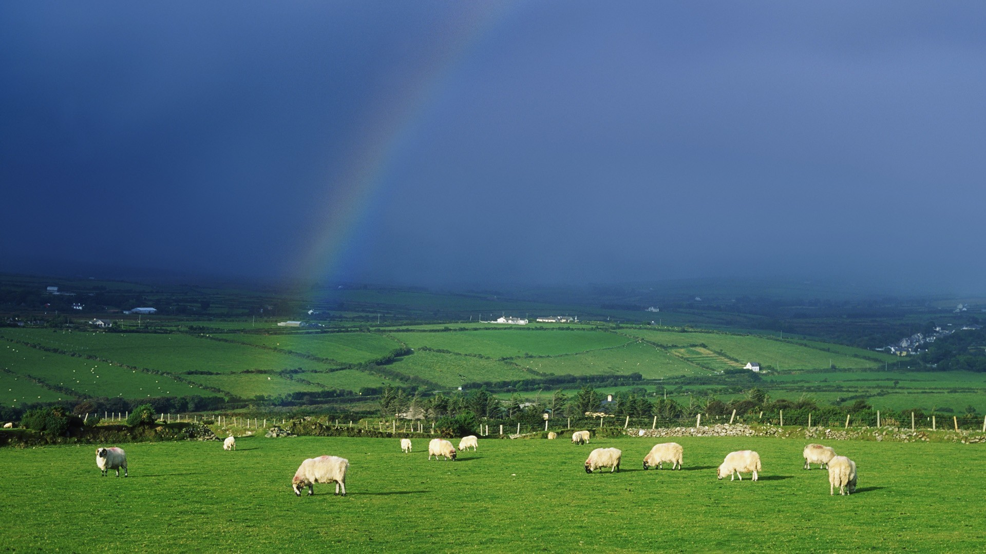 1920x1080 free Sheep Ireland wallpaper, resolution : 1920 x tags: Sheep, Ireland,  Rainbows.