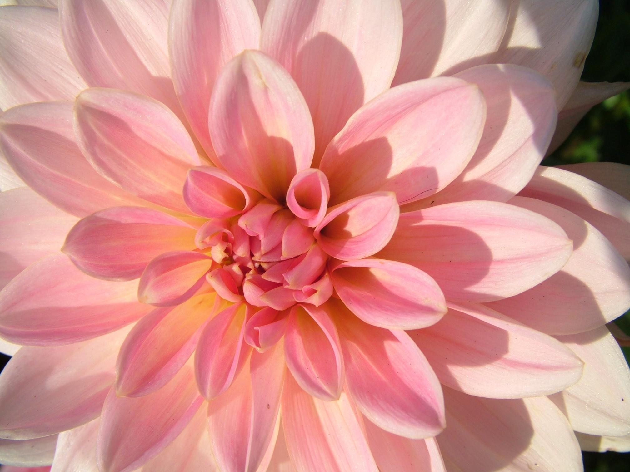 Pink Flower Desktop Wallpaper (70+ Images
