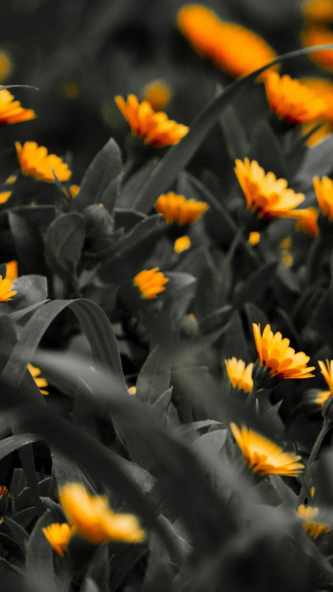 Flowers On Black Background Wallpaper 77 Images