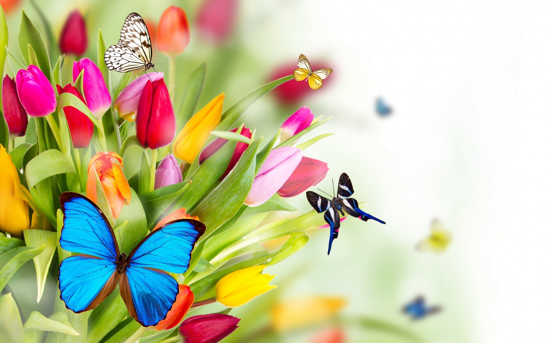 1920x1200 Spring Flowers Wallpapers HD Pictures One HD Wallpaper Pictures