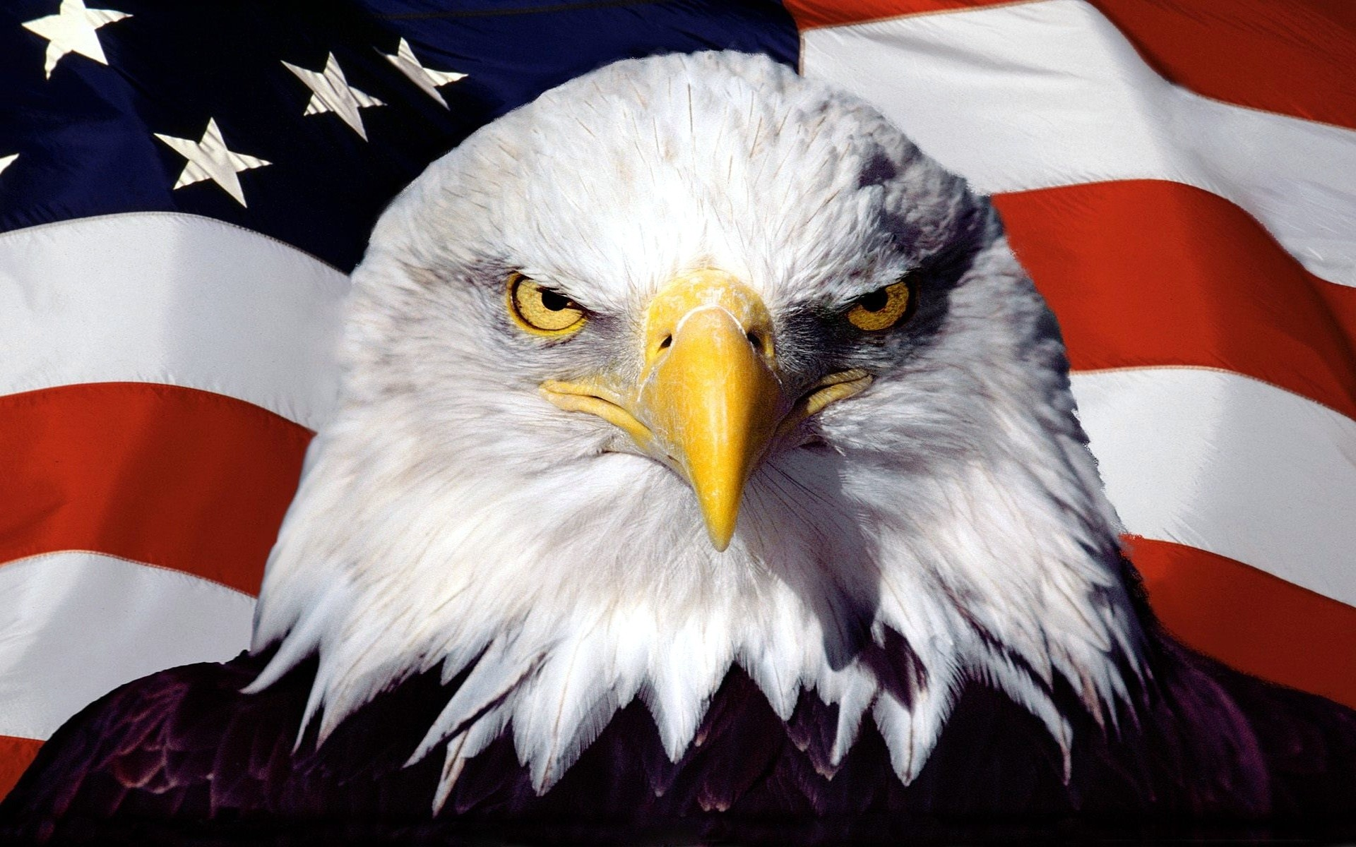 1920x1200 0 American Eagle Wallpapers American Eagle Wallpapers