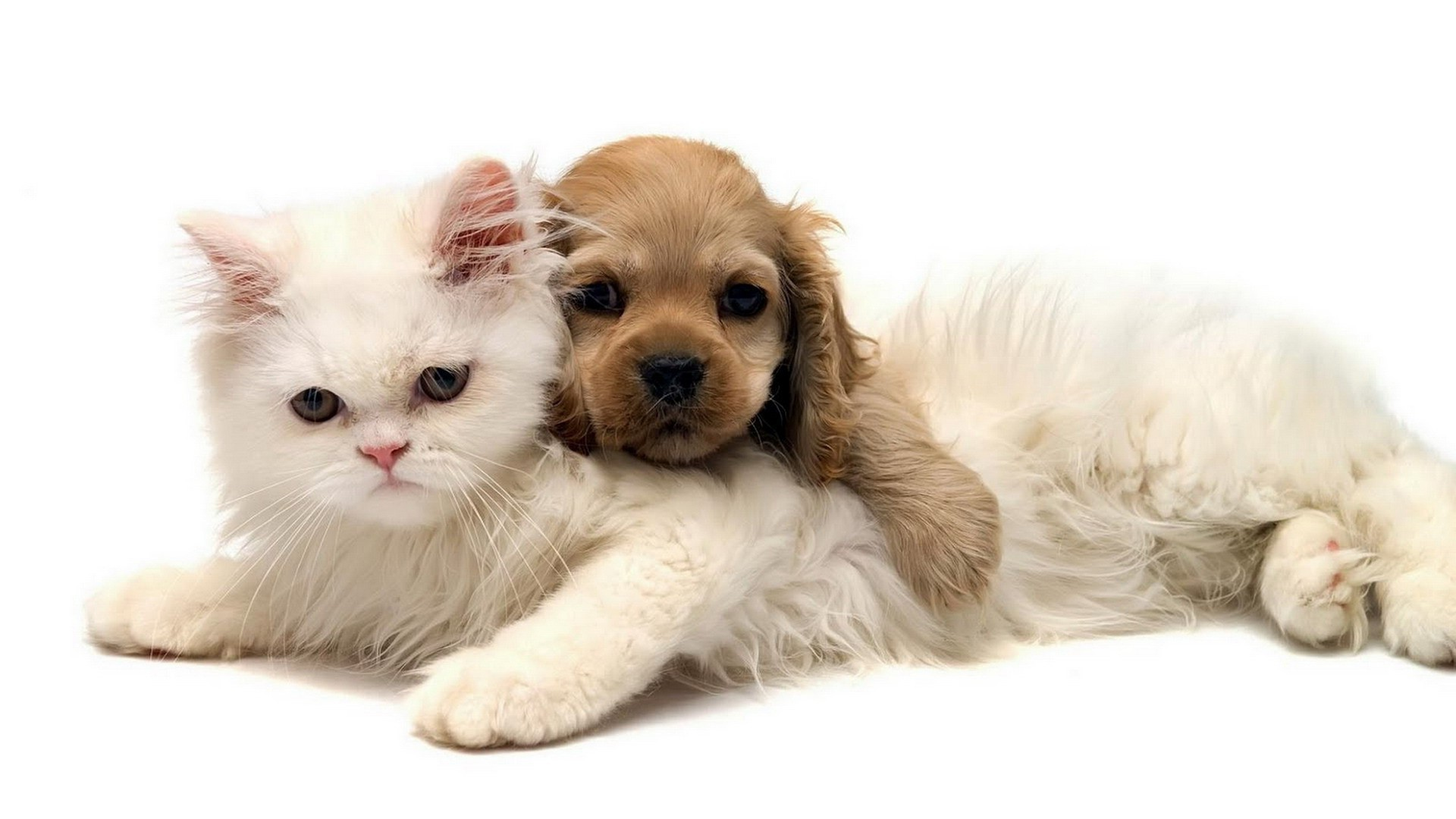 1920x1080 cats and kittens and dogs and puppies images gallery - PETS . ...
