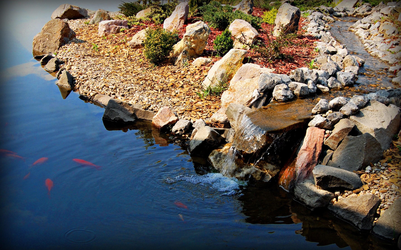 Koi pond wallpaper 56 images for Garden pond design software free download