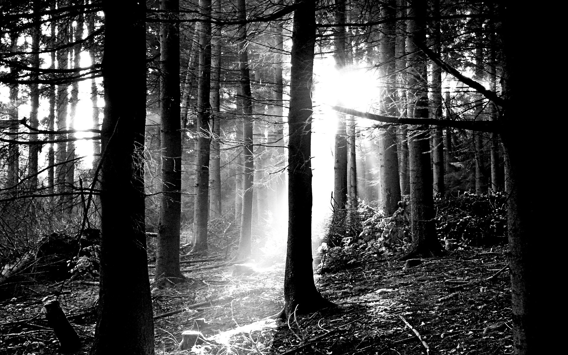 1920x1200 wallpaper.wiki-Free-Black-and-White-Forest-Picture-