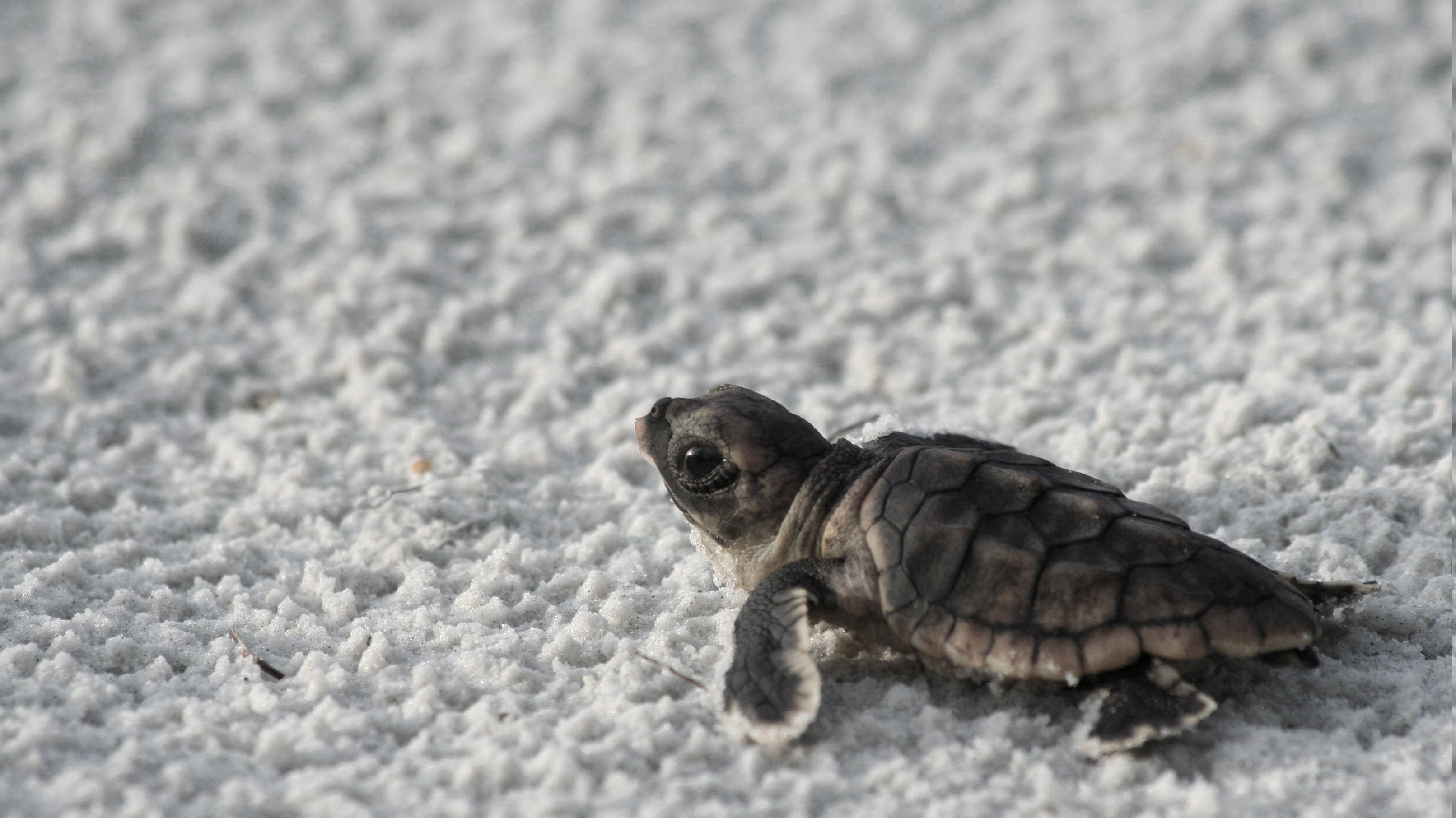 Biggest Collection Of Hd Baby Wallpaper For Desktop And Mobile: Cute Turtle Wallpaper (59+ Images