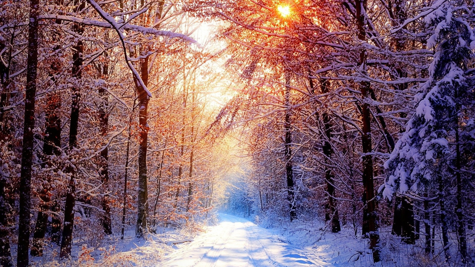1080p winter wallpaper 65 images for Full hd 1080p wallpapers