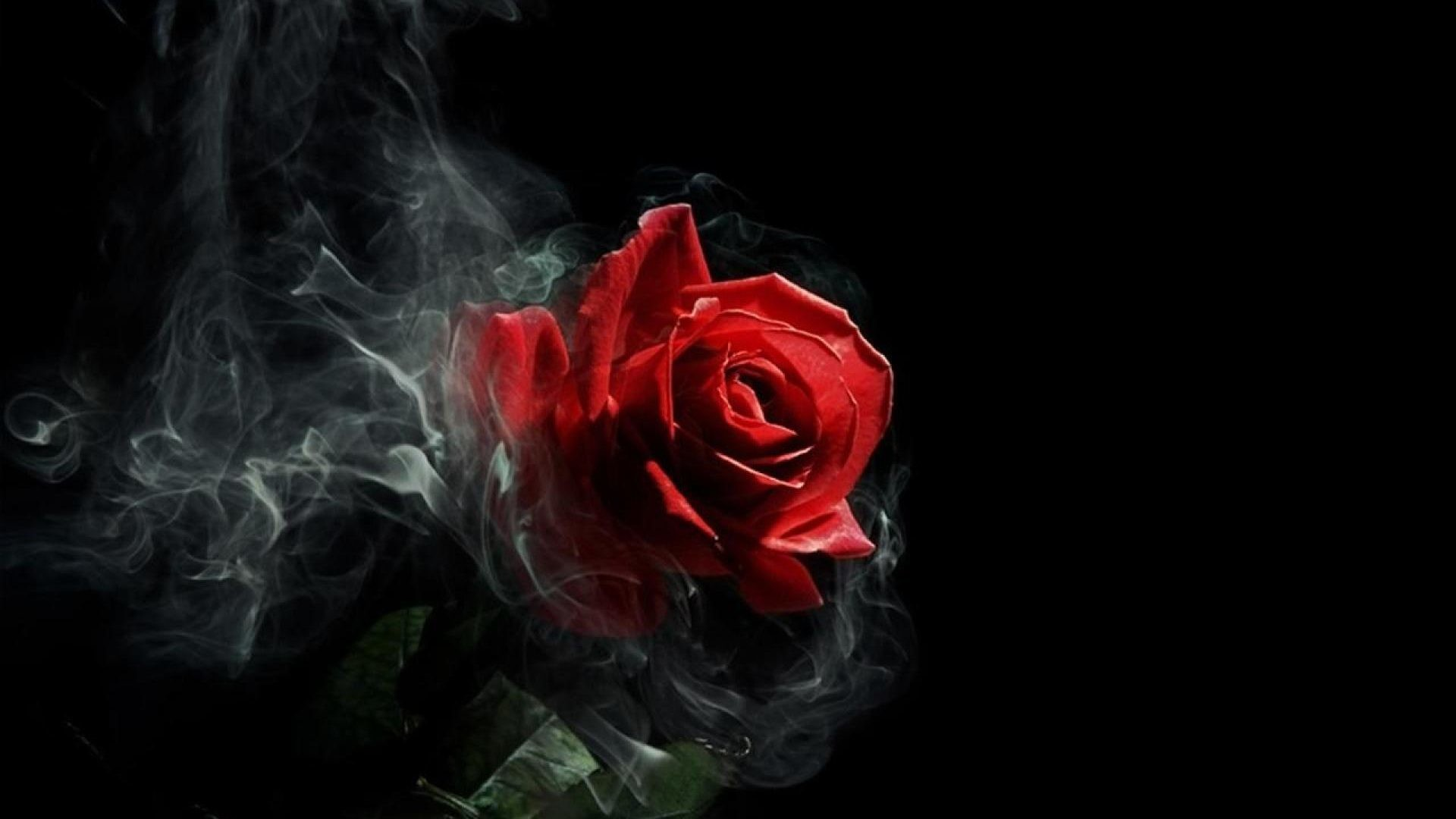 "1920x1080 Full HD HD Tablet 10"" Tablet 7"". Wallpaper Name : Gothic Rose"