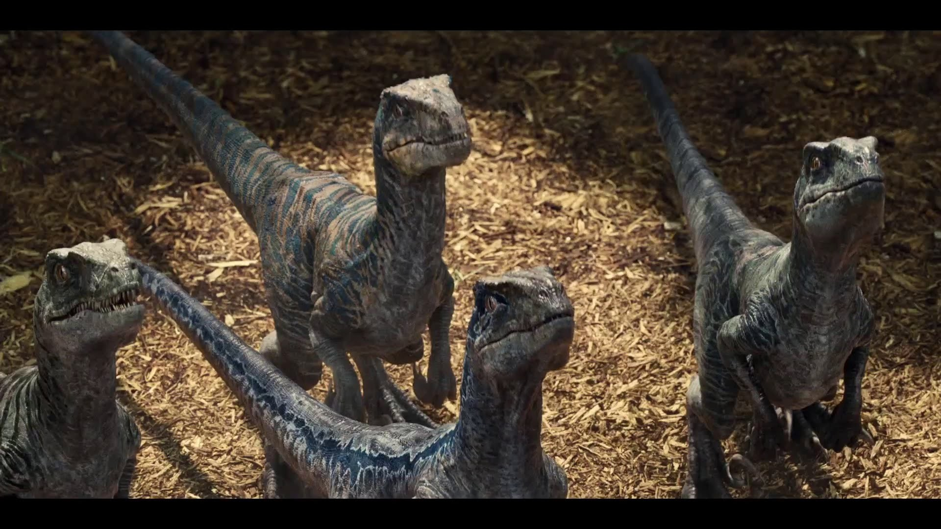 jurassic world velociraptor wallpaper 82 images