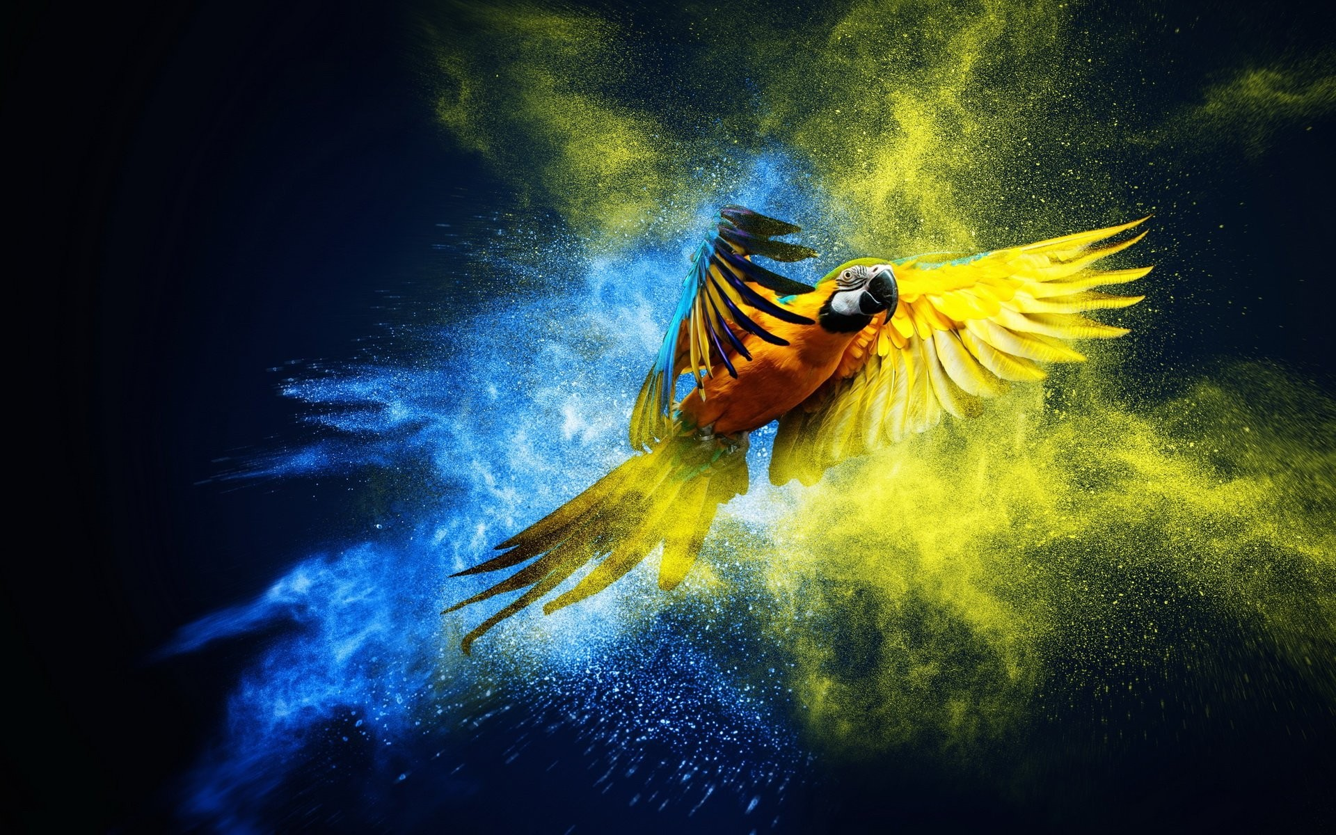 1920x1200 Artwork Parrot Macaw Images Bird Wallpaper