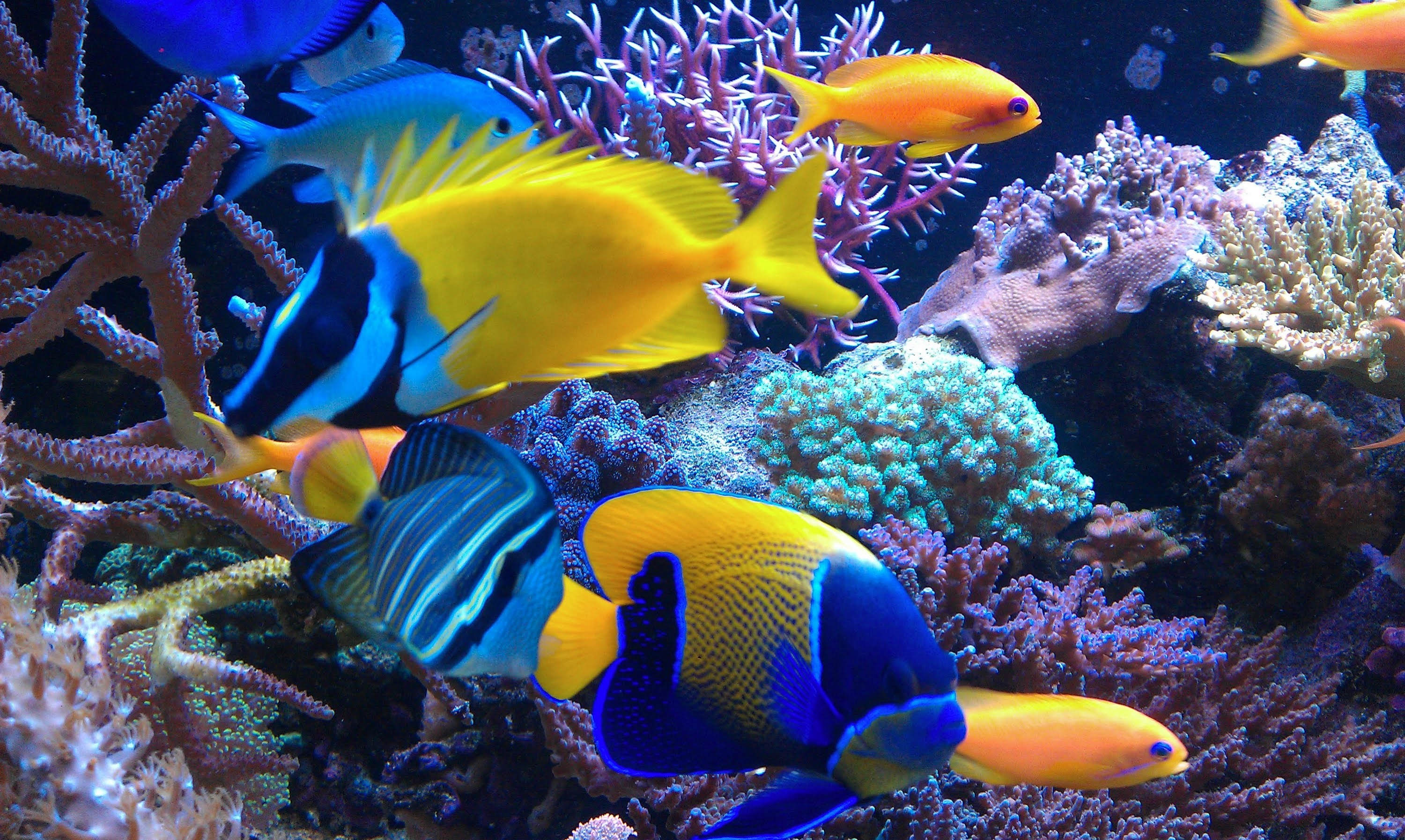 Saltwater fish wallpaper 58 images for How to saltwater fish