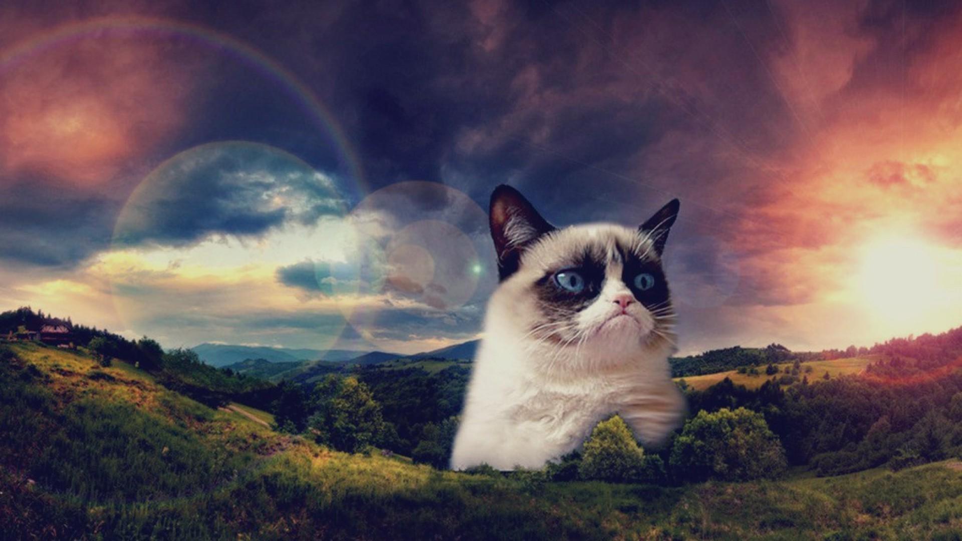 Hd Grumpy Cat