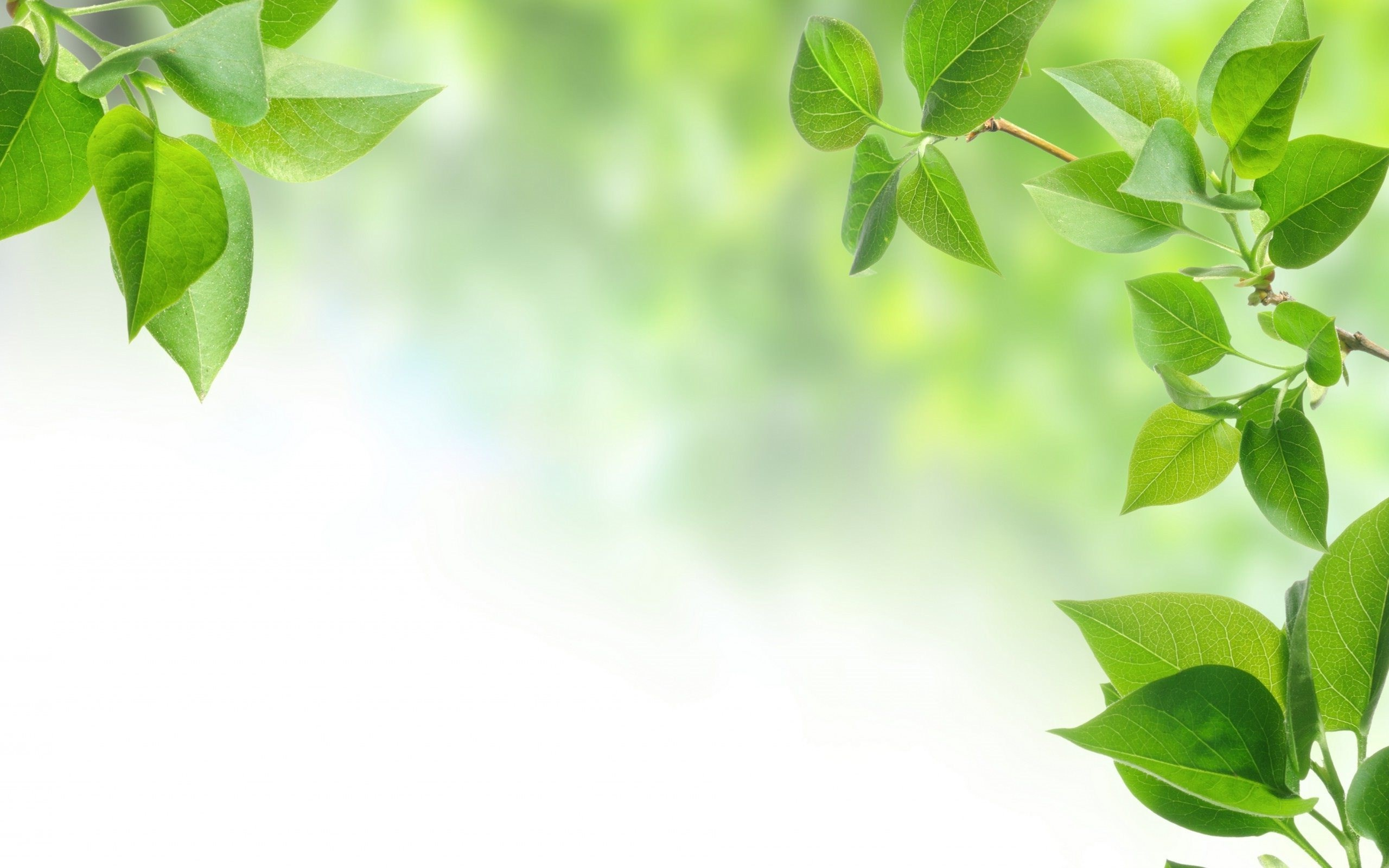 leaf hd leaves background nature vertical 2213