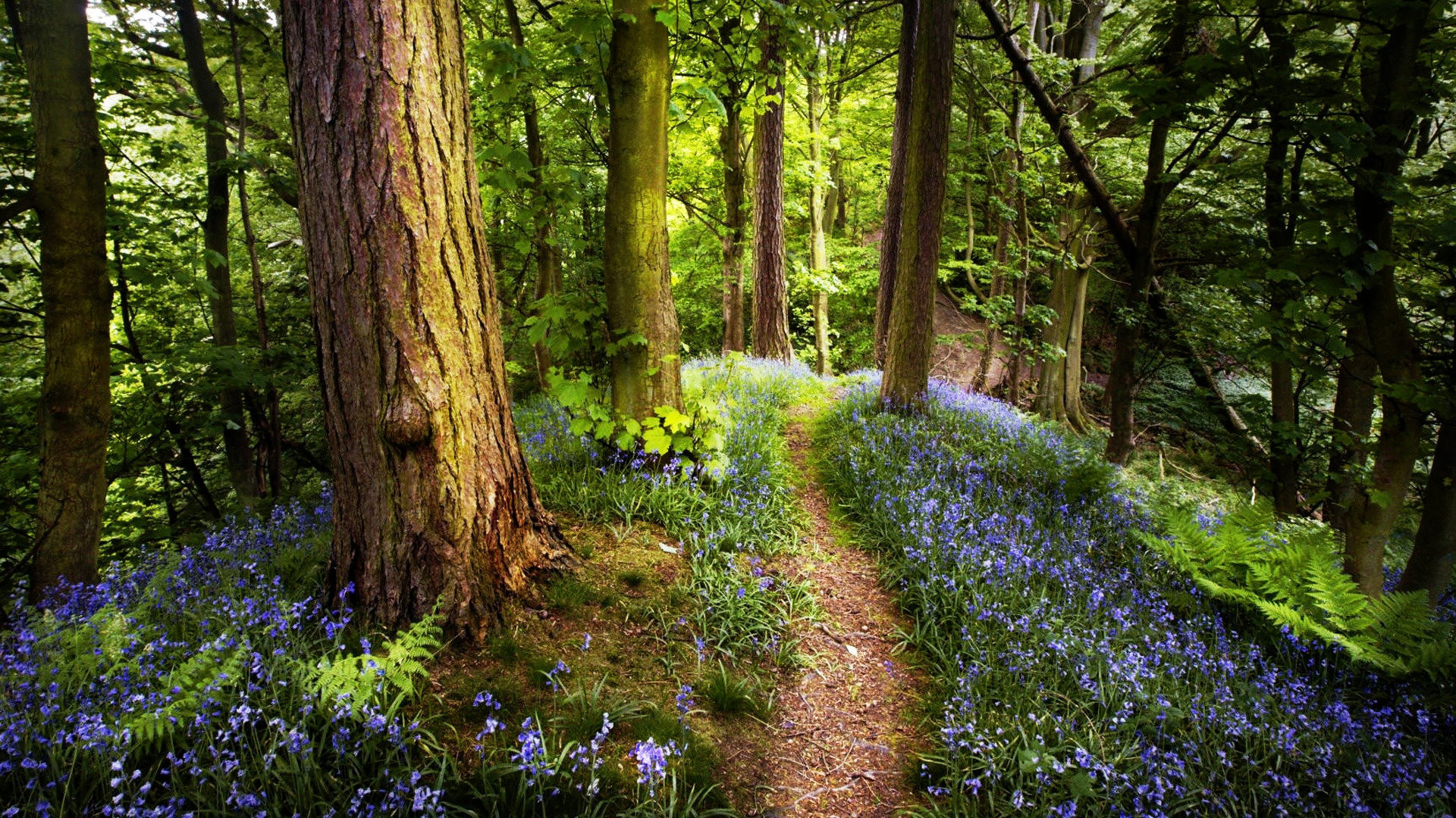 beautiful forest wallpaper 53 images