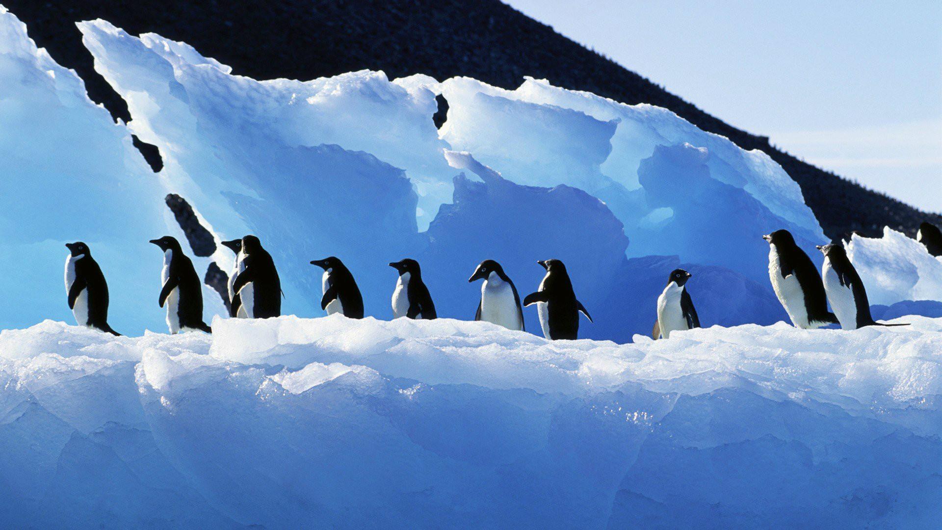 Penguin Wallpaper Screensavers (56+ images)